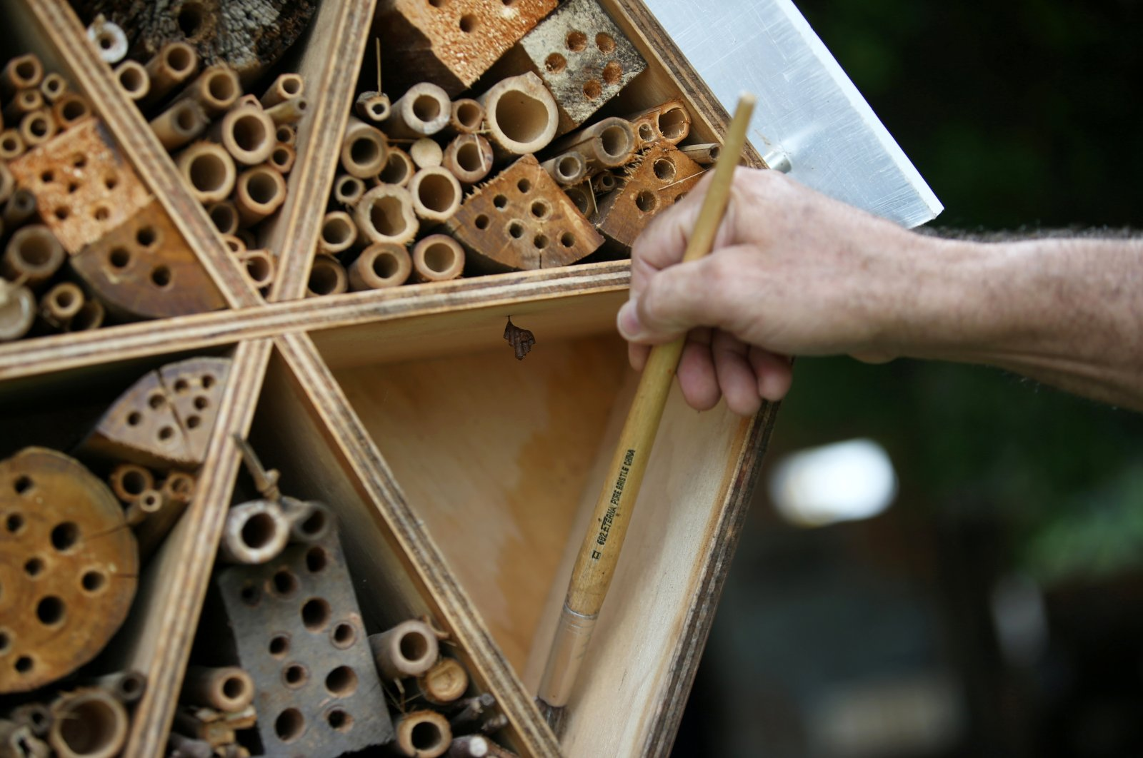 Hector Ivan Valencia, an assistant for the local authority's risk management unit, cleans the structure of a wooden hotel for solitary bees made by the Metropolitan Area of the Aburra Valley (AMVA) in Barbosa, Colombia, April 21, 2021. (Reuters Photo)
