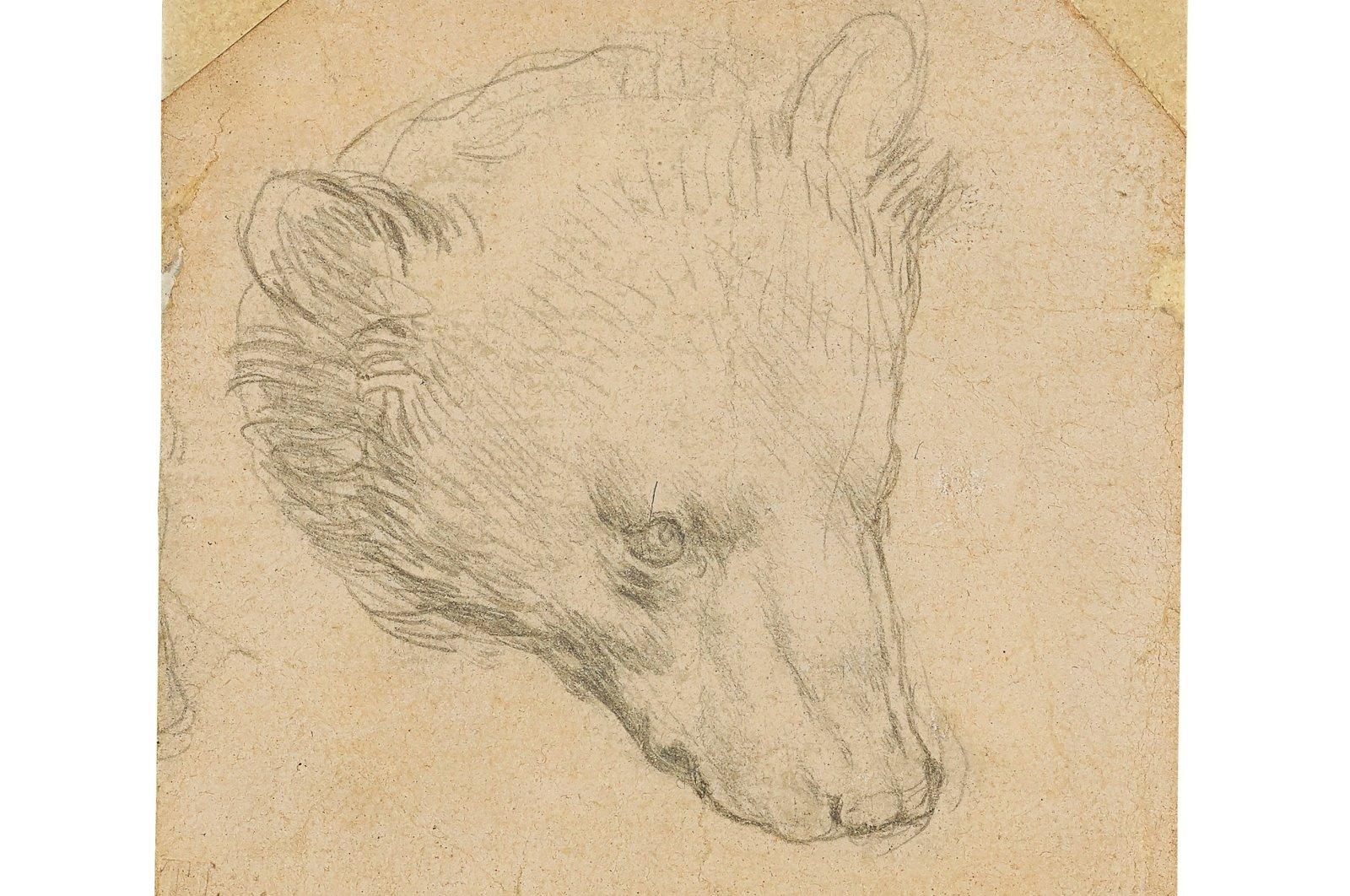 "Leonardo da Vinci's (1452-1519) ""Head of a bear"" drawing is seen in this undated handout image. (Christie's 2021/Handout via REUTERS)"