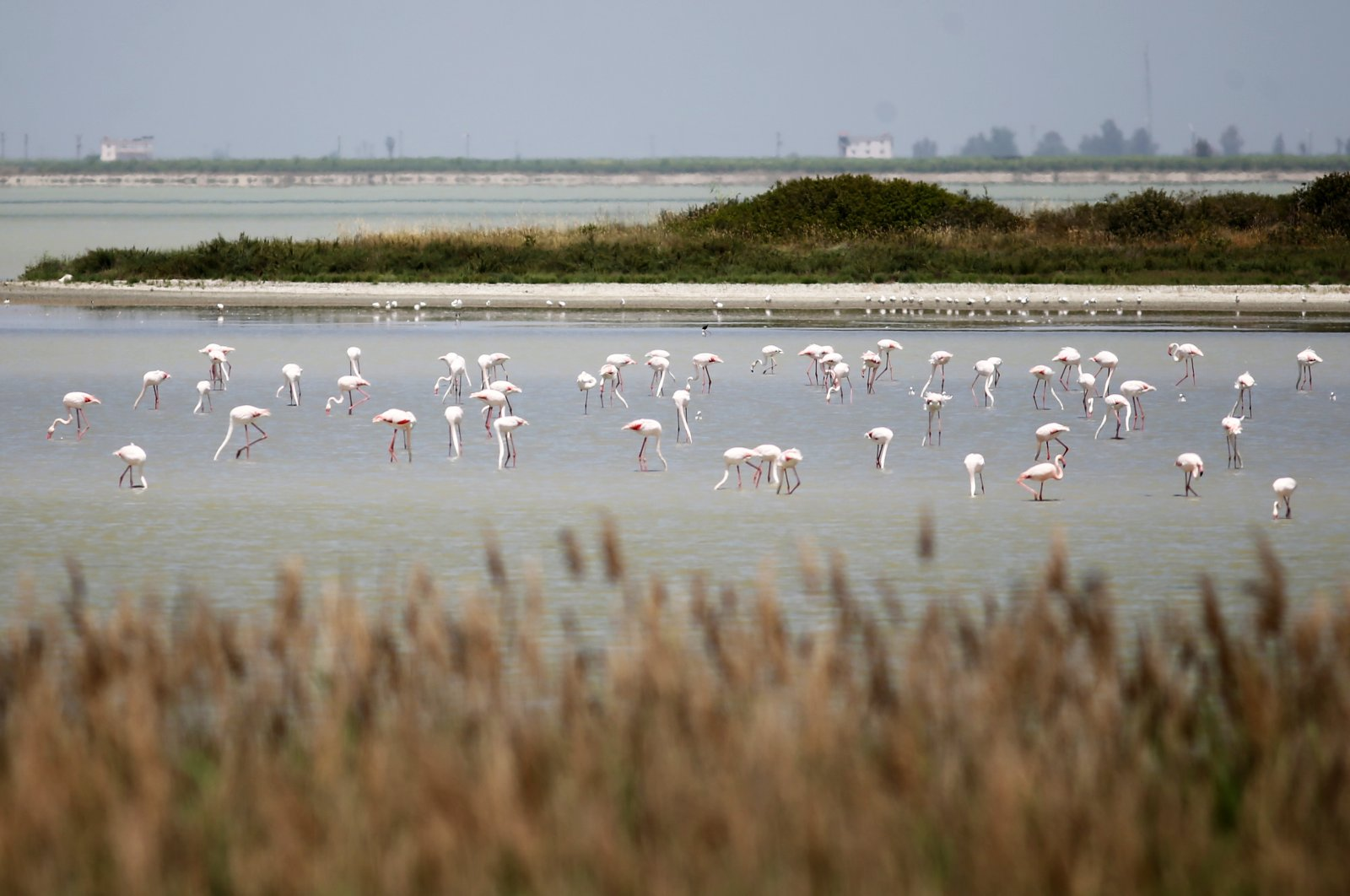 Flamingoes rest at a wetland in Adana, southern Turkey, May 9, 2021. (AA PHOTO)