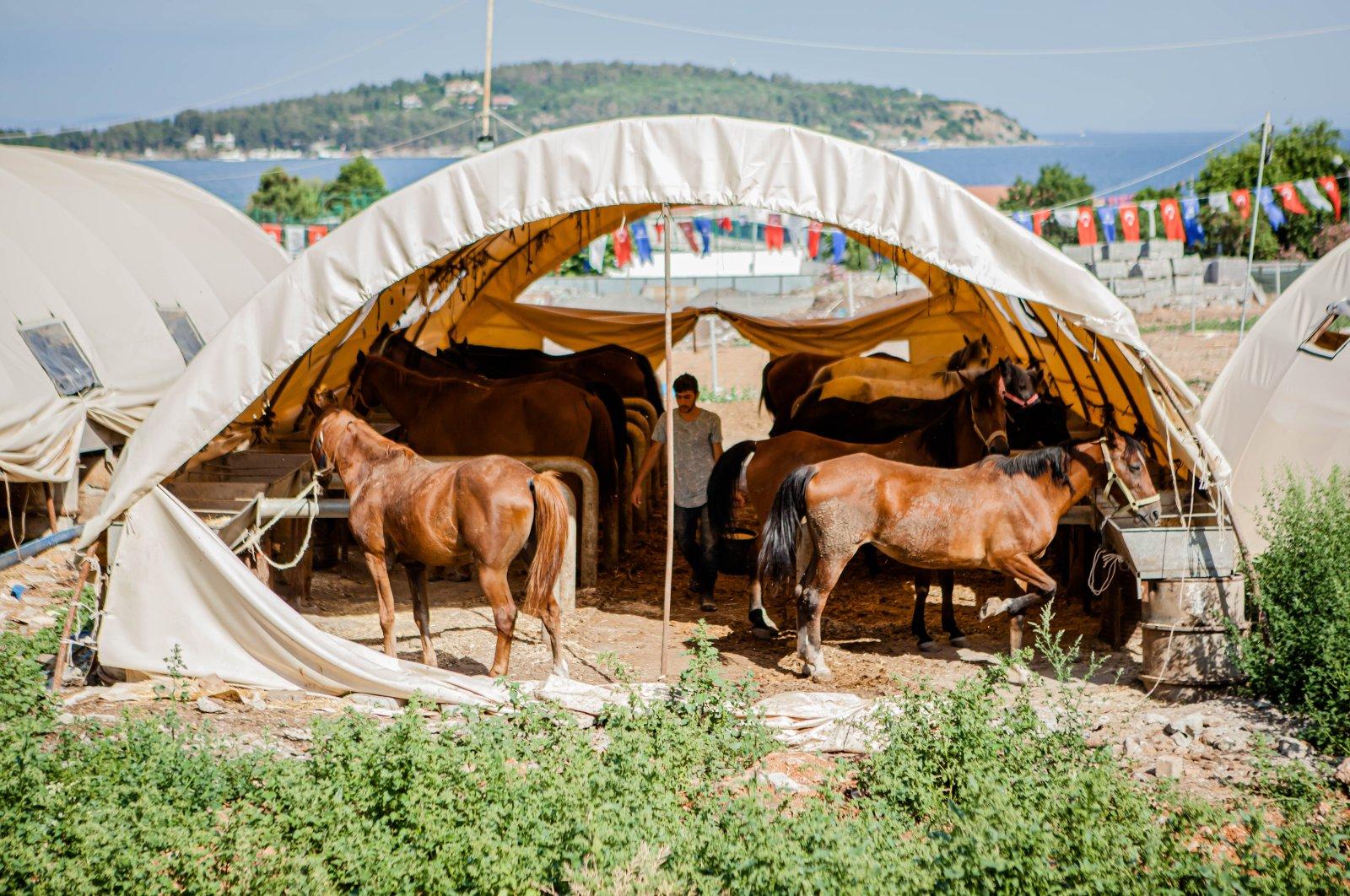 Horses are seen in their stable on Büyükada, Istanbul, Turkey, Sept. 18, 2020. (Photo by Hatice Çınar)