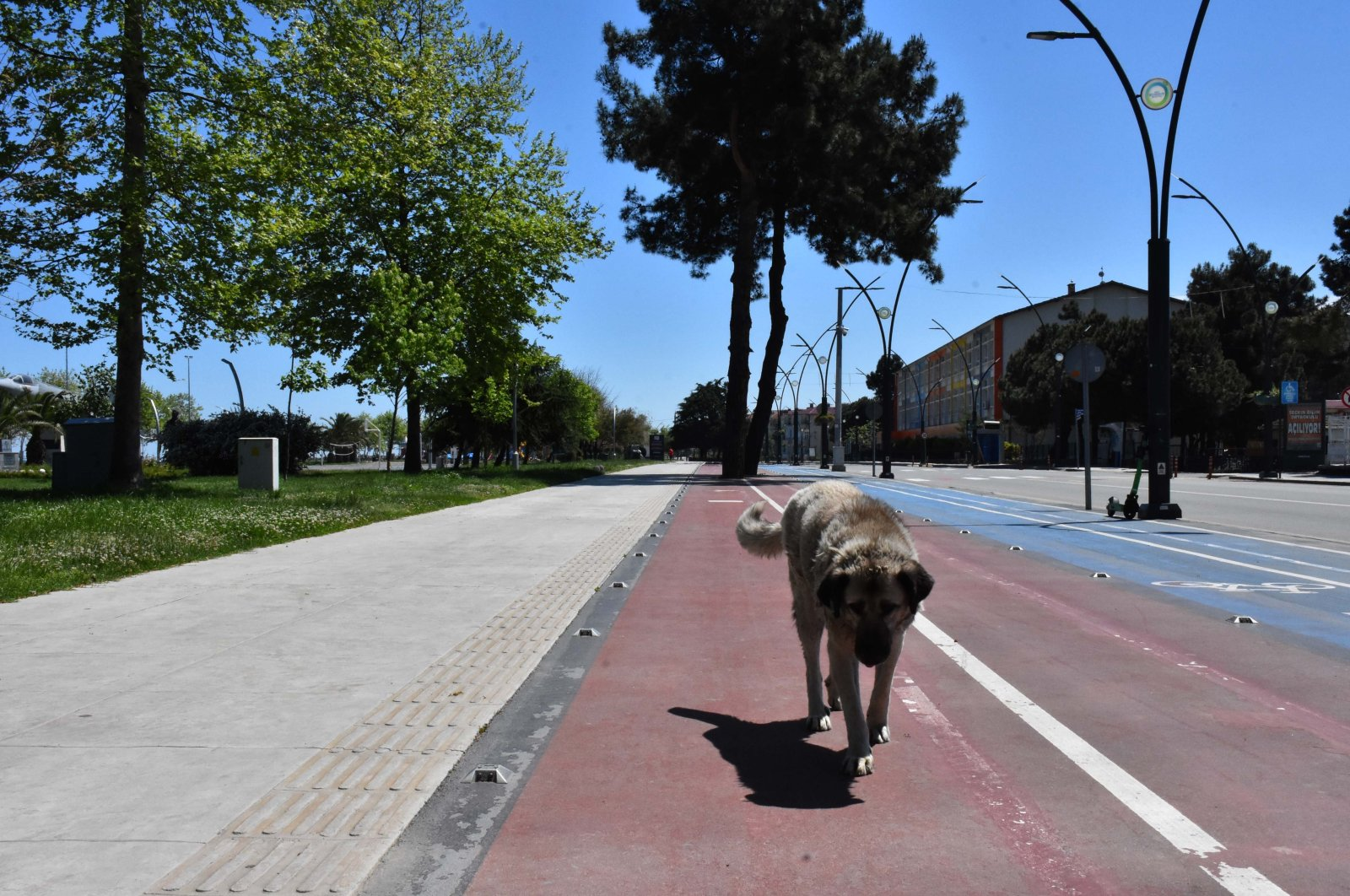 Only a dog walks on a usually busy coastal strip of the city during the lockdown, in Ordu, northern Turkey, May 11, 2021. (AA PHOTO)