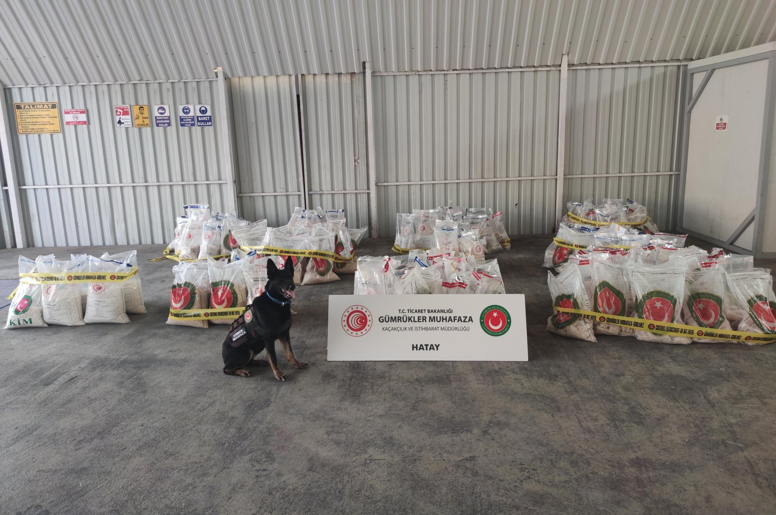 A drug sniffer dog stands near seized Captagon pills, Hatay province, Turkey, May 16, 2021. (DHA PHOTO)