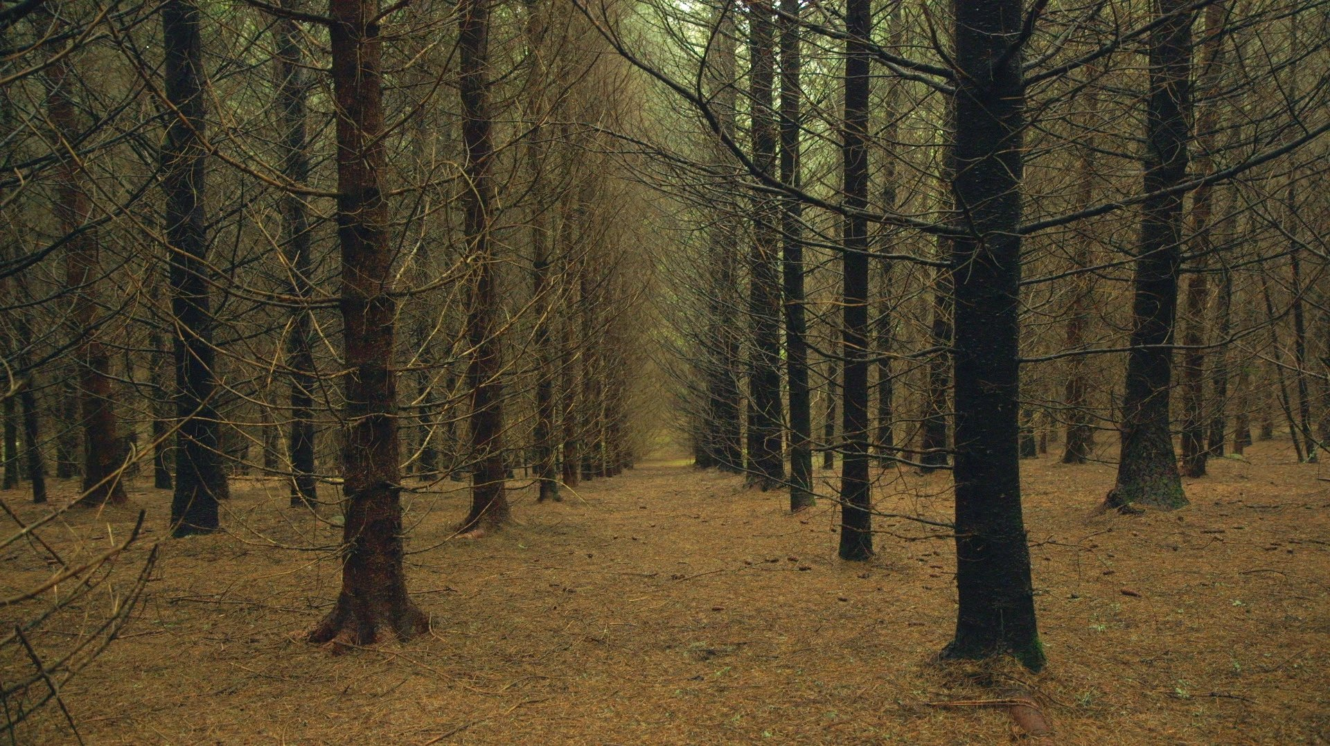 """A still shot from """"Le temps des forets"""" (""""The Time of Forests"""") by director Francois-Xavier Drouet."""