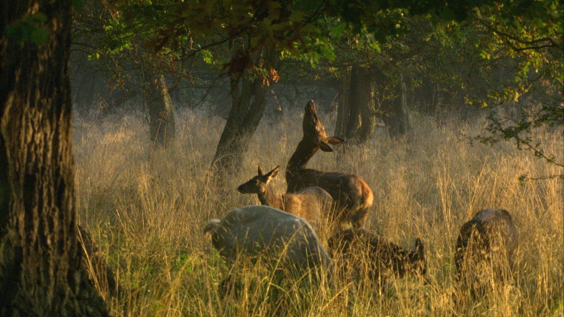 """A still shot from """"Das geheime Leben der Baume"""" (""""The Hidden Life of Trees"""")."""