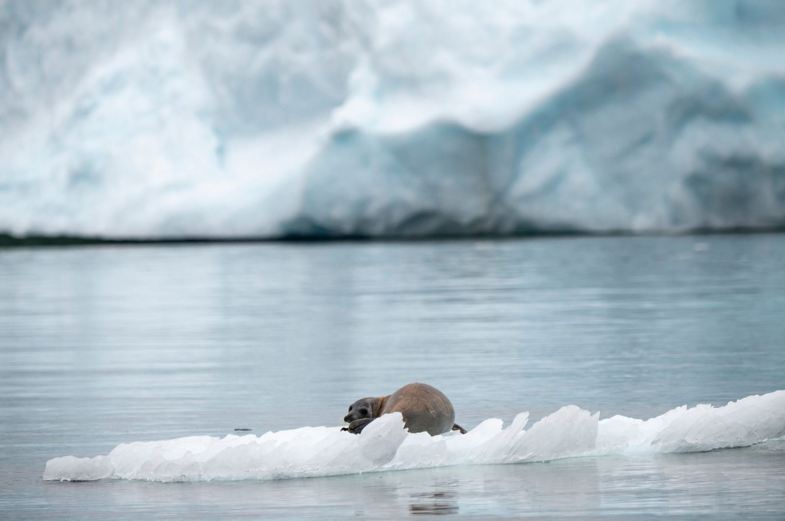 A seal sits on an iceberg off King's Point in Newfoundland, Canada. (AFP File Photo)