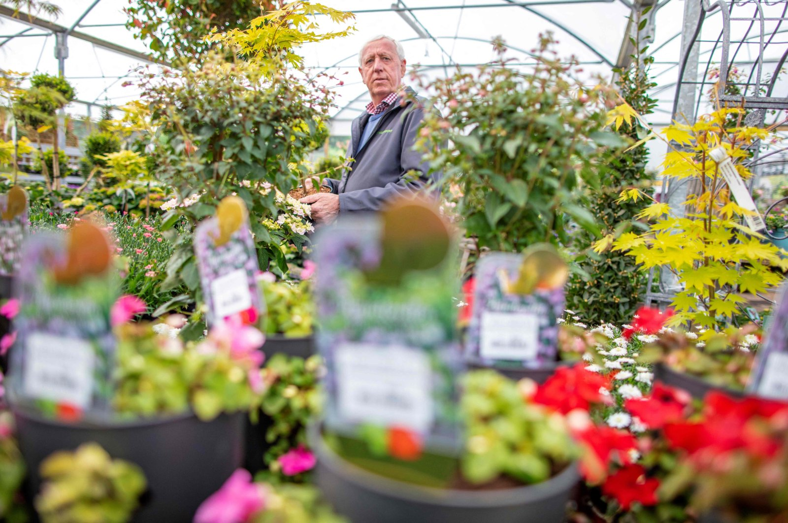 Owner Robin Mercer poses amongst flowering plants in a greenhouse at Hillmount Garden Centre in east Belfast, Northern Ireland, May 19, 2021. (AFP Photo)