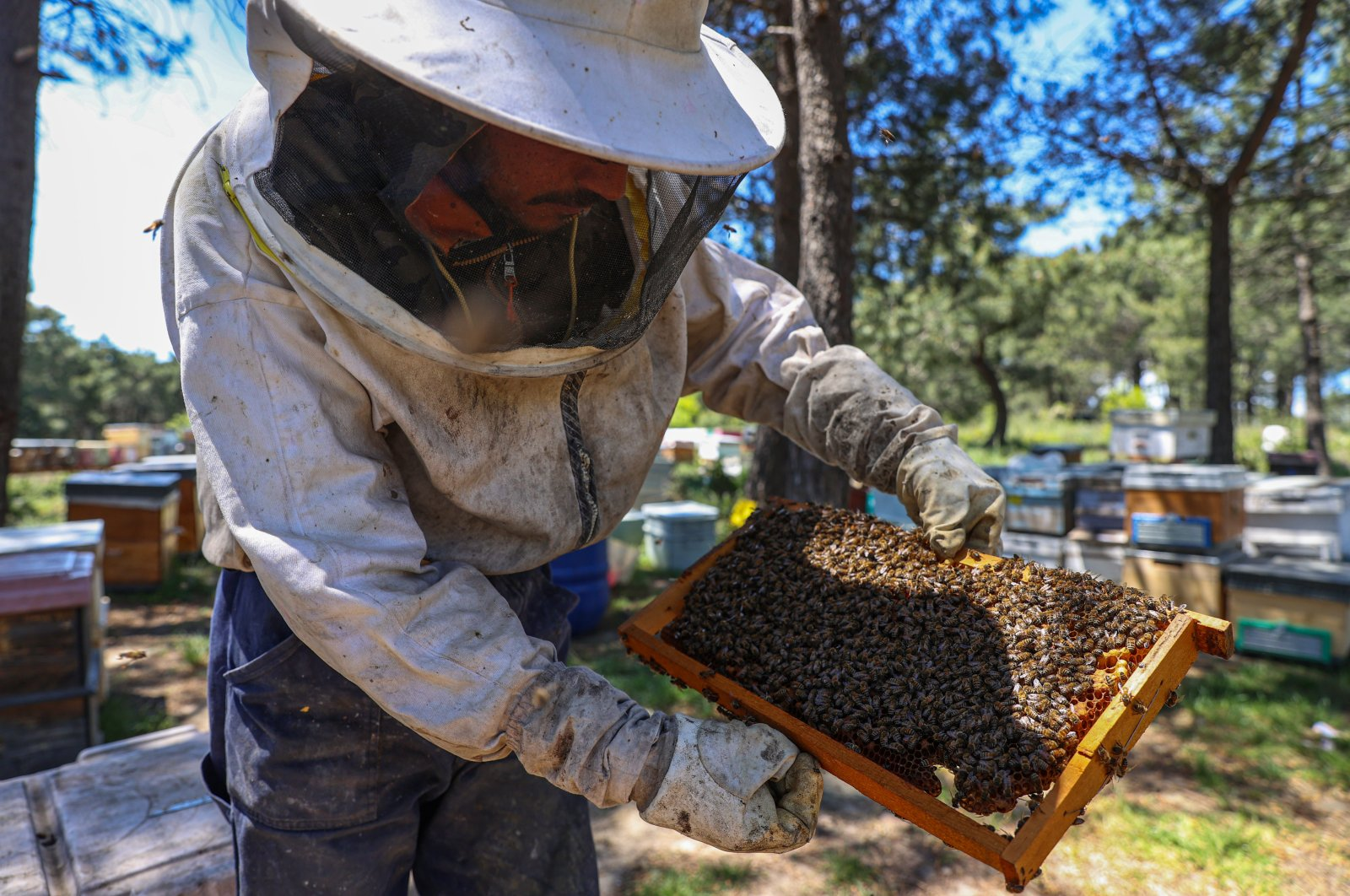 A beekeper tends the bees, in Istanbul, Turkey, May 23, 2021. (AA PHOTO)