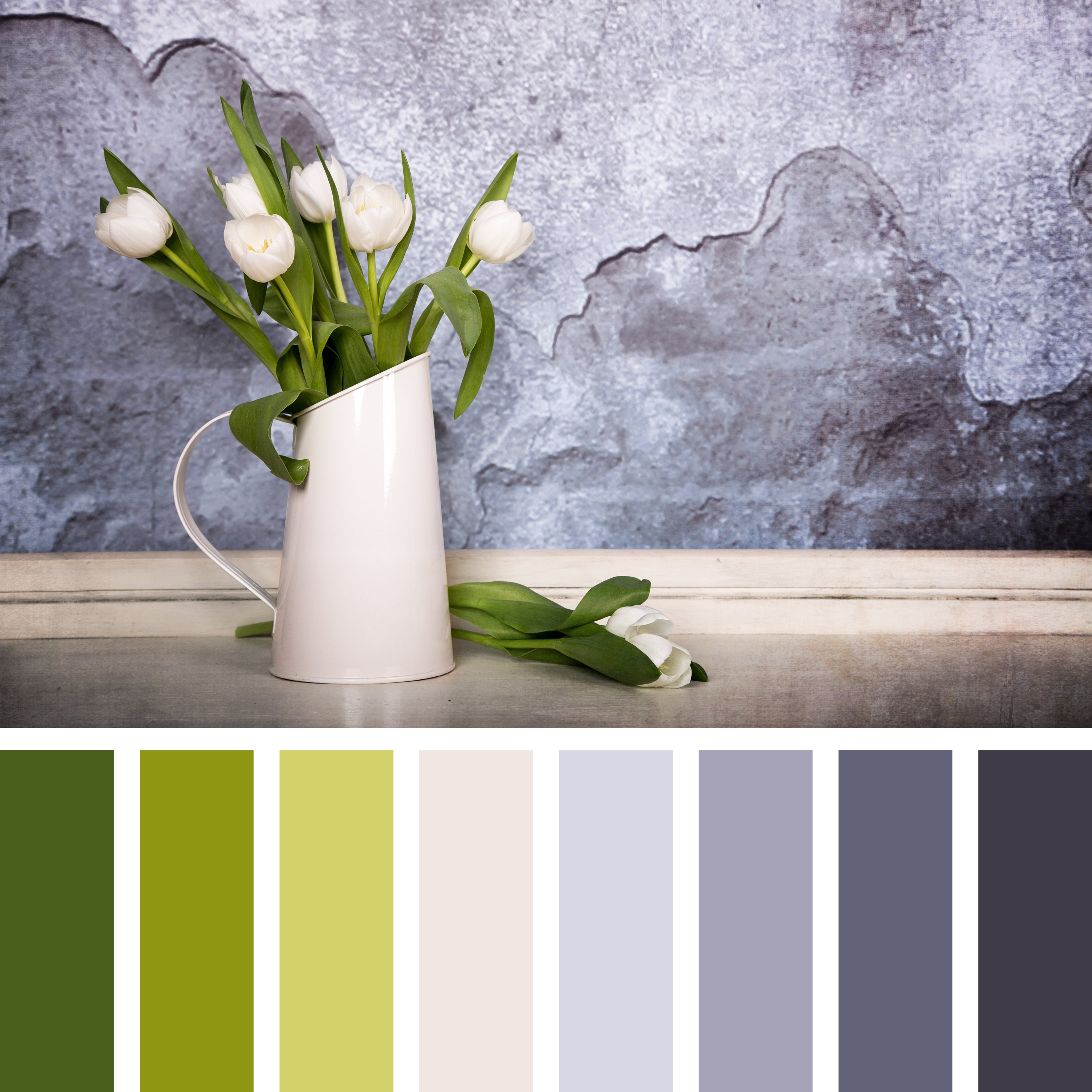 A tin jug filled with white tulips and positioned in front of a textured plaster wall is seen with a color palette of complementary color swatches. (Shutterstock Photo)