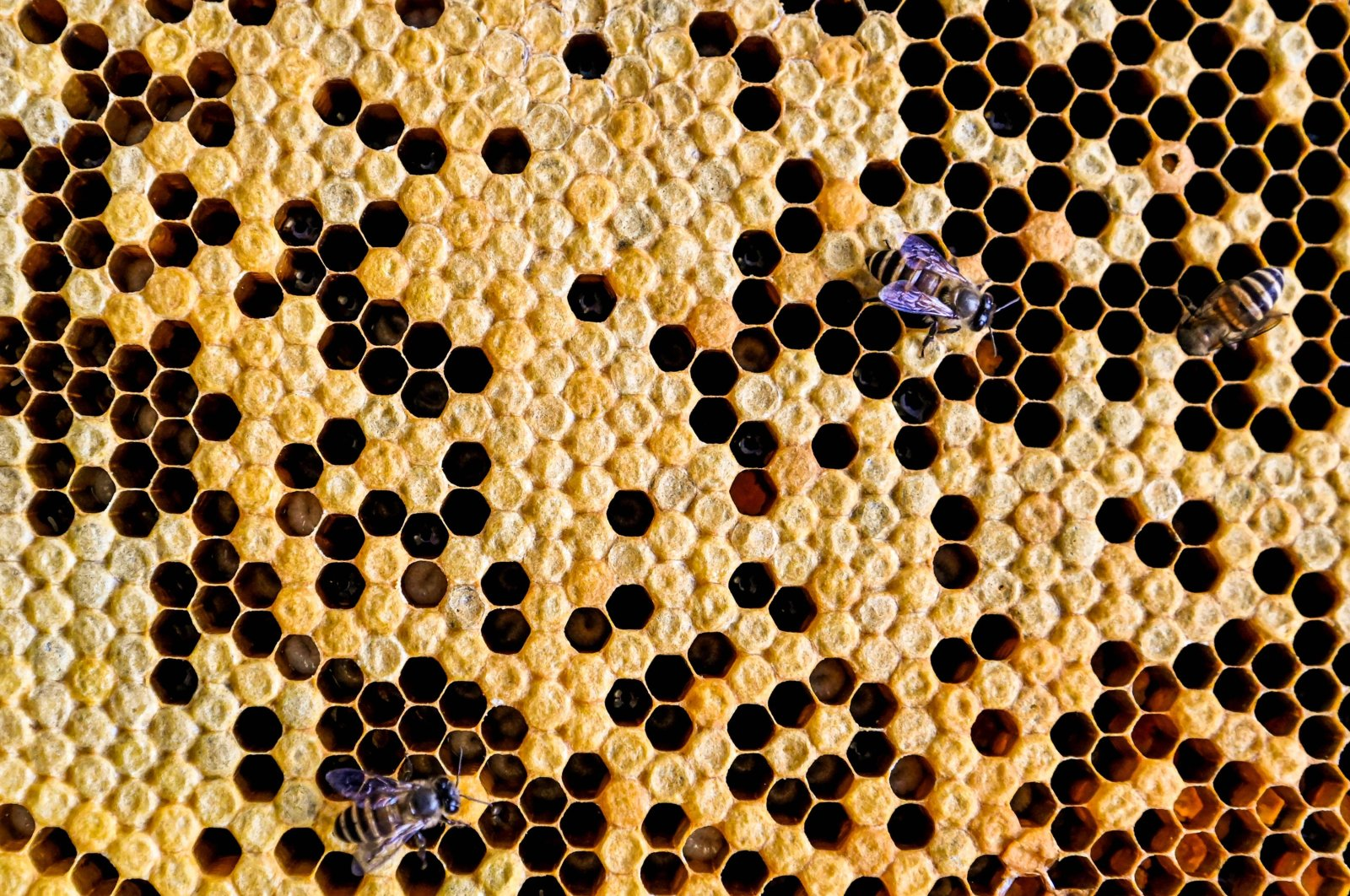 This picture taken on April 23, 2021 shows rescued bees on a honeycomb in the parking lot of an apartment building in Kuala Lumpur. (AFP Photo)