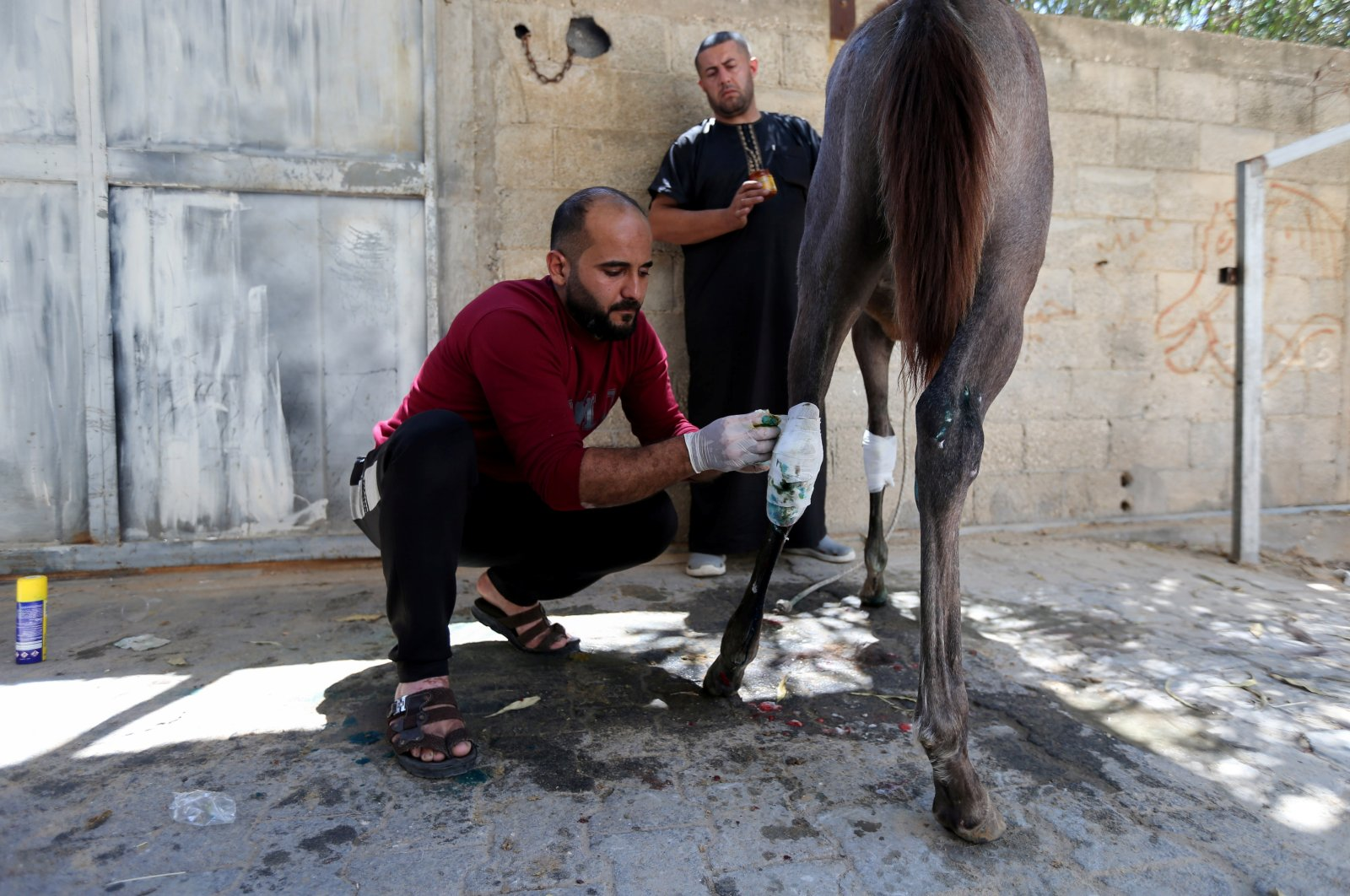 A man treats Palestinian Omar Shahin's horse, which was wounded during Israeli airstrikes, in the northern Gaza Strip, May 24, 2021. (Reuters Photo)