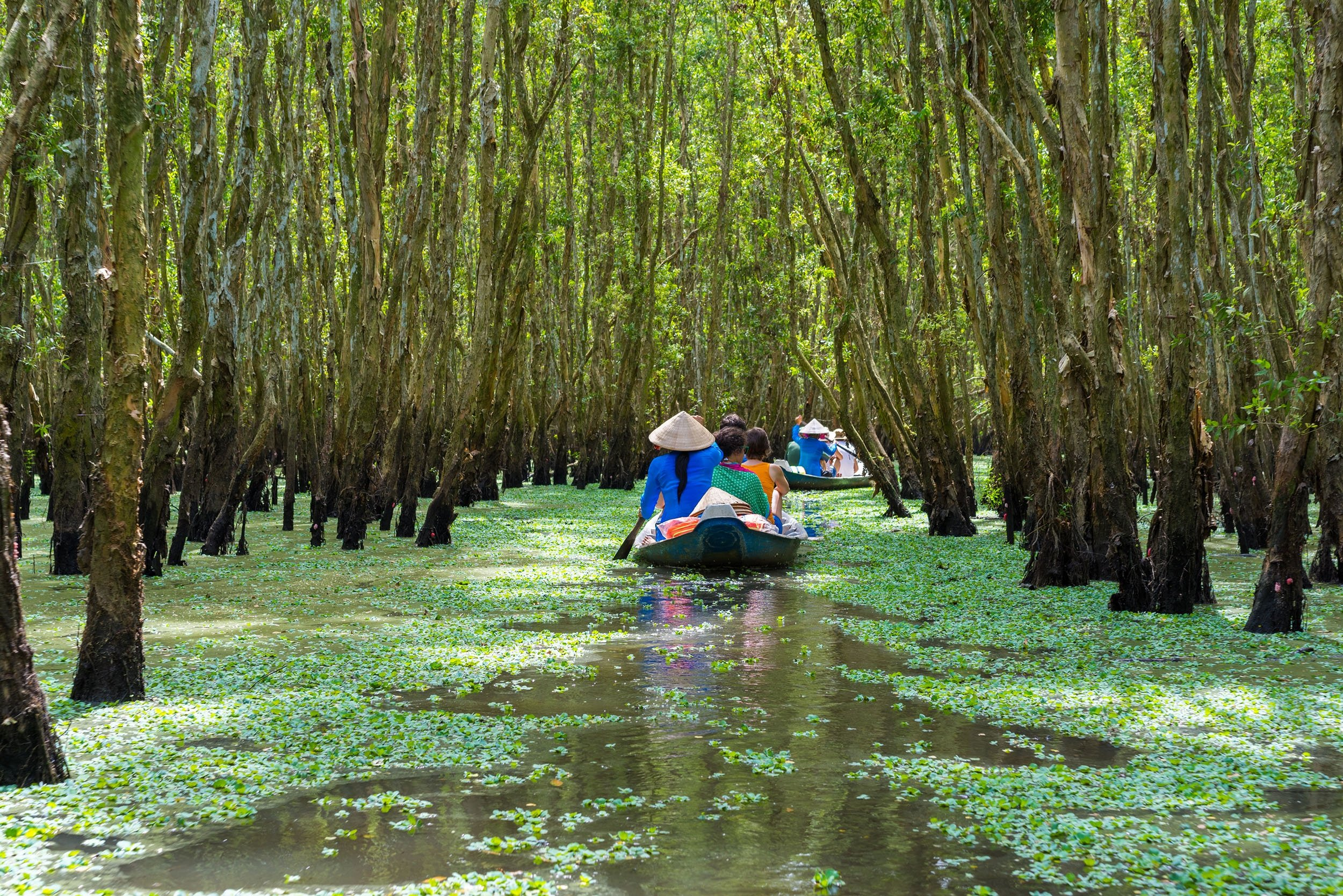 Locals row a small touristic boat among trees in the Mekong delta, Vietnam.(Shutterstock Photo)