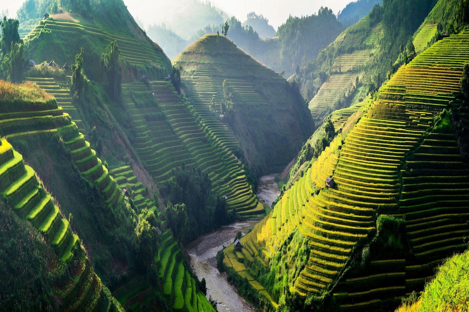 Sun shines onto the terraces of rice fields in northwestern Vietnam. (Shutterstock Photo)