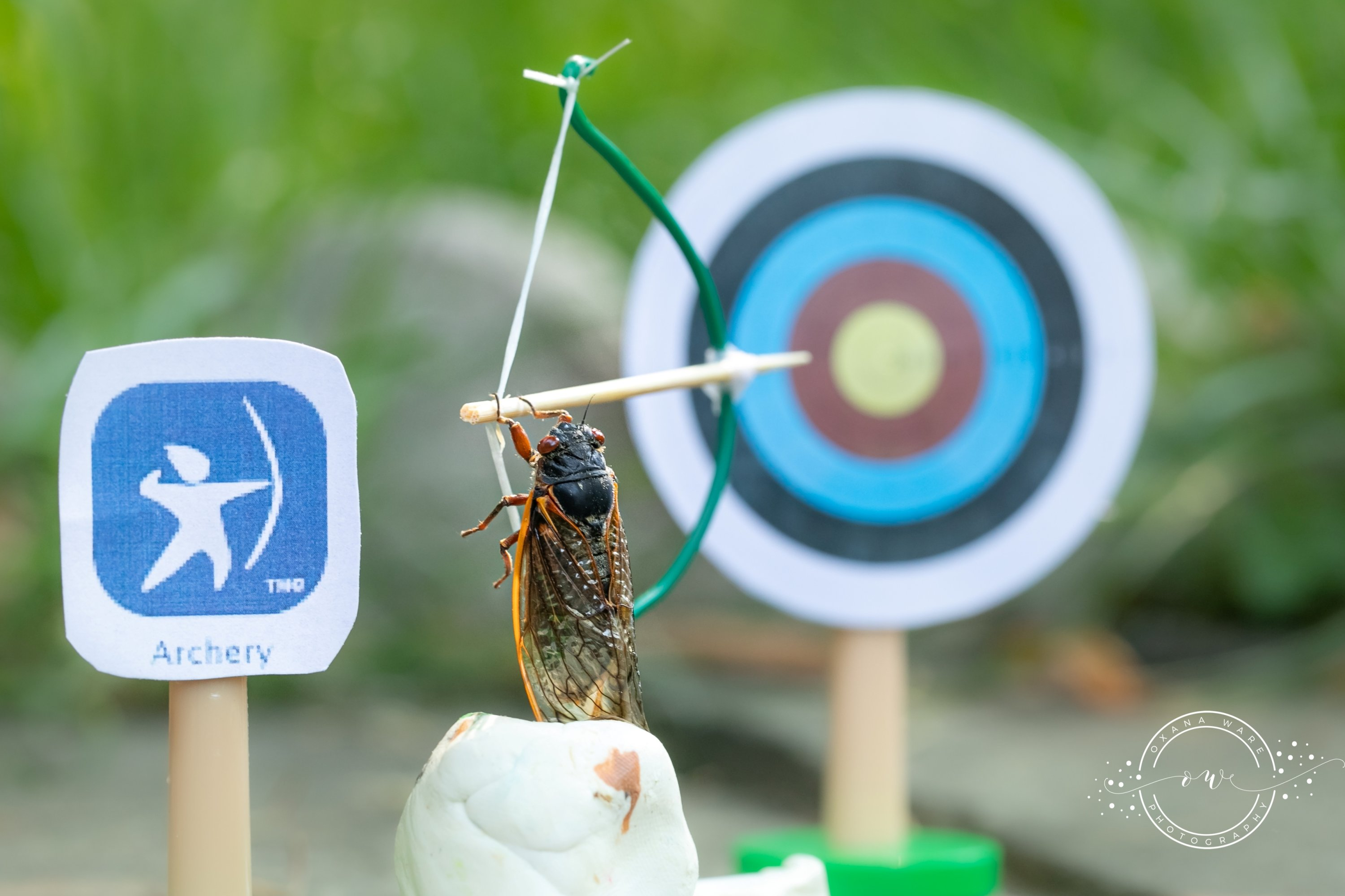 Cicadas are posed in an Olympic archery scene by Virginia photographer and cicada enthusiast Oxana Ware in Arlington, Virginia, U.S., in this May, 2021 handout photo.    (REUTERS Photo)