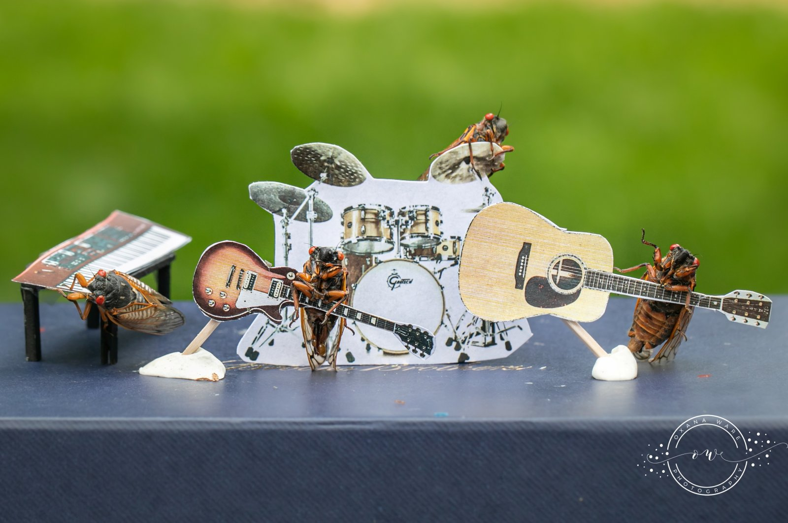 Cicadas are posed in a band scene by Virginia photographer and cicada enthusiast Oxana Ware in Arlington, Virginia, U.S., in this May, 2021 handout photo.  (REUTERS Photo)