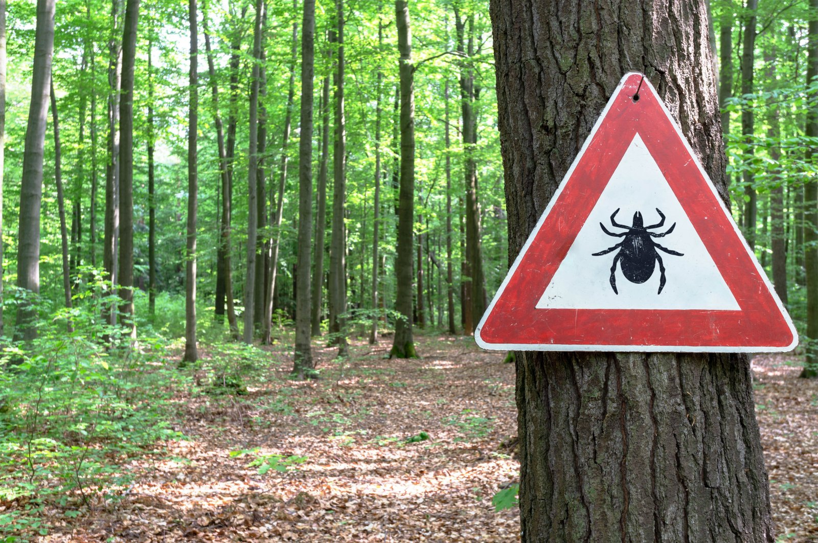 Ticks are carriers of the Crimean-Congo Hemorrhagic Fever disease that commonly affects people in rural areas or those spending time in green spaces without proper protection. (Shutterstock Photo)