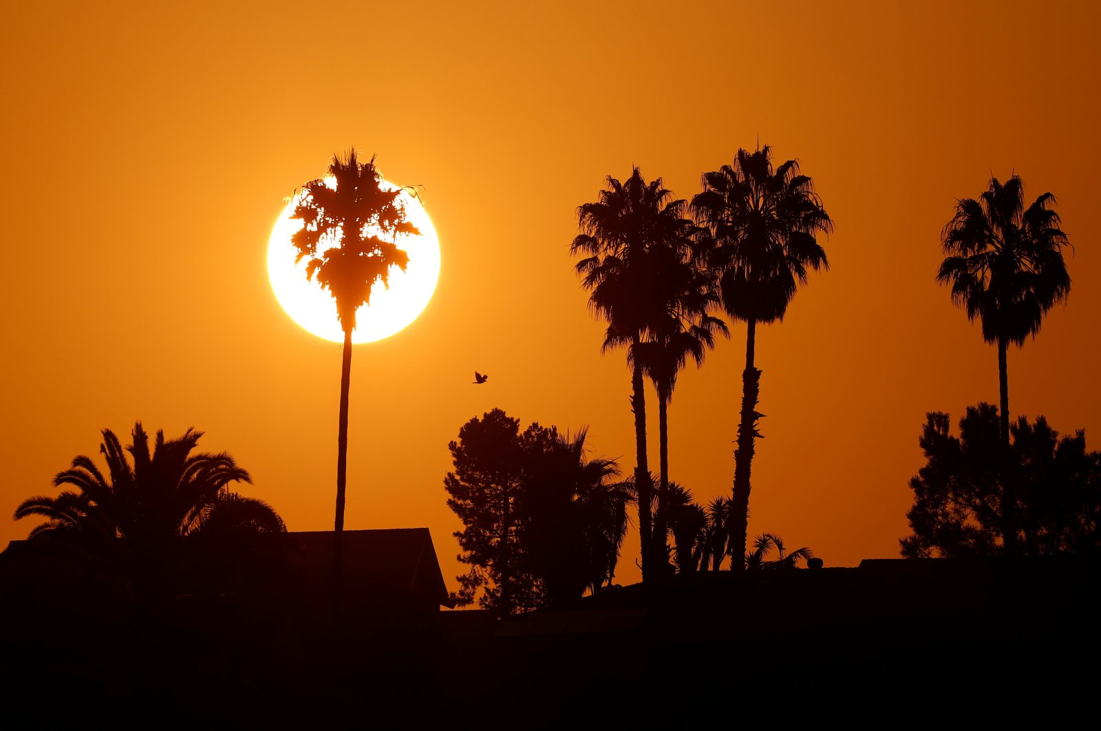 The morning sun rises over a neighborhood as a heatwave continues during the COVID-19 outbreak in Encinitas, California, U.S., Aug. 19, 2020. (Reuters Photo)
