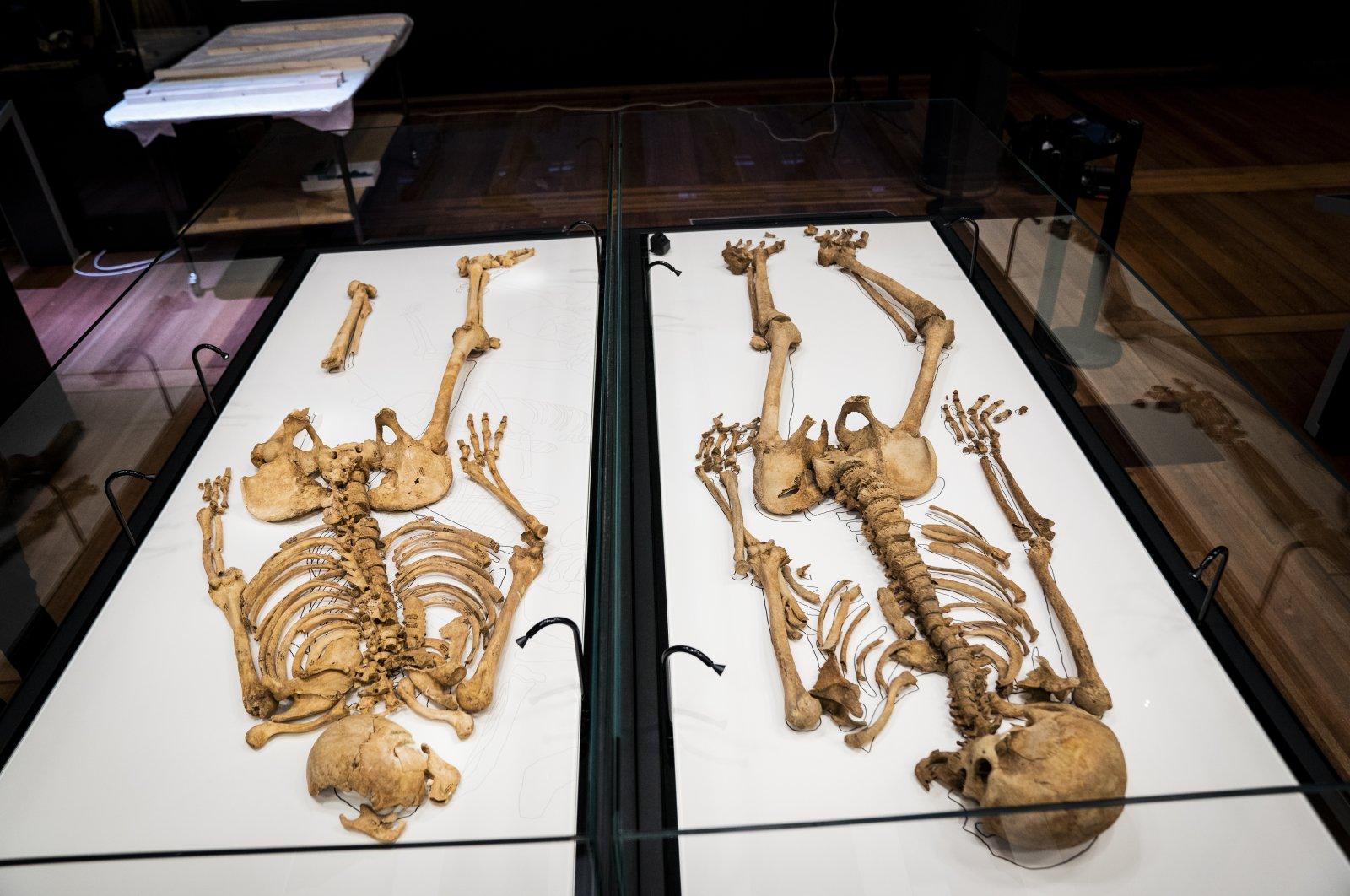 Two skeletons lie in a showcase at the National Museum of Denmark in Copenhagen, June 9, 2021.  (Ida Marie Odgaard/Ritzau Scanpix via AP)
