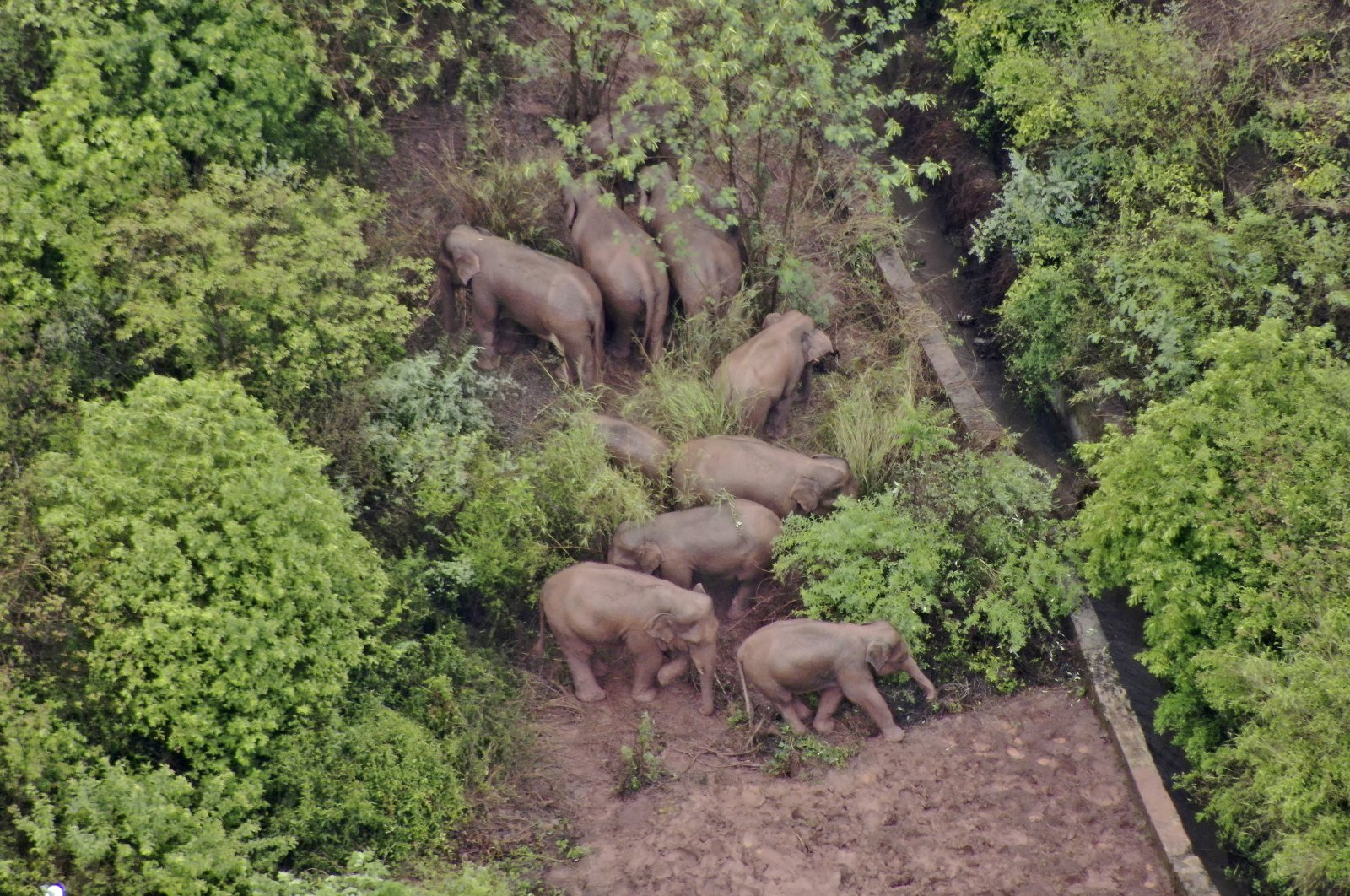 A migrating herd of elephants gathers near the Shijie Township in Yimen County, Yuxi city of southwestern China's Yunnan Province, June 10, 2021. (Yunnan Forest Fire Brigade via AP)