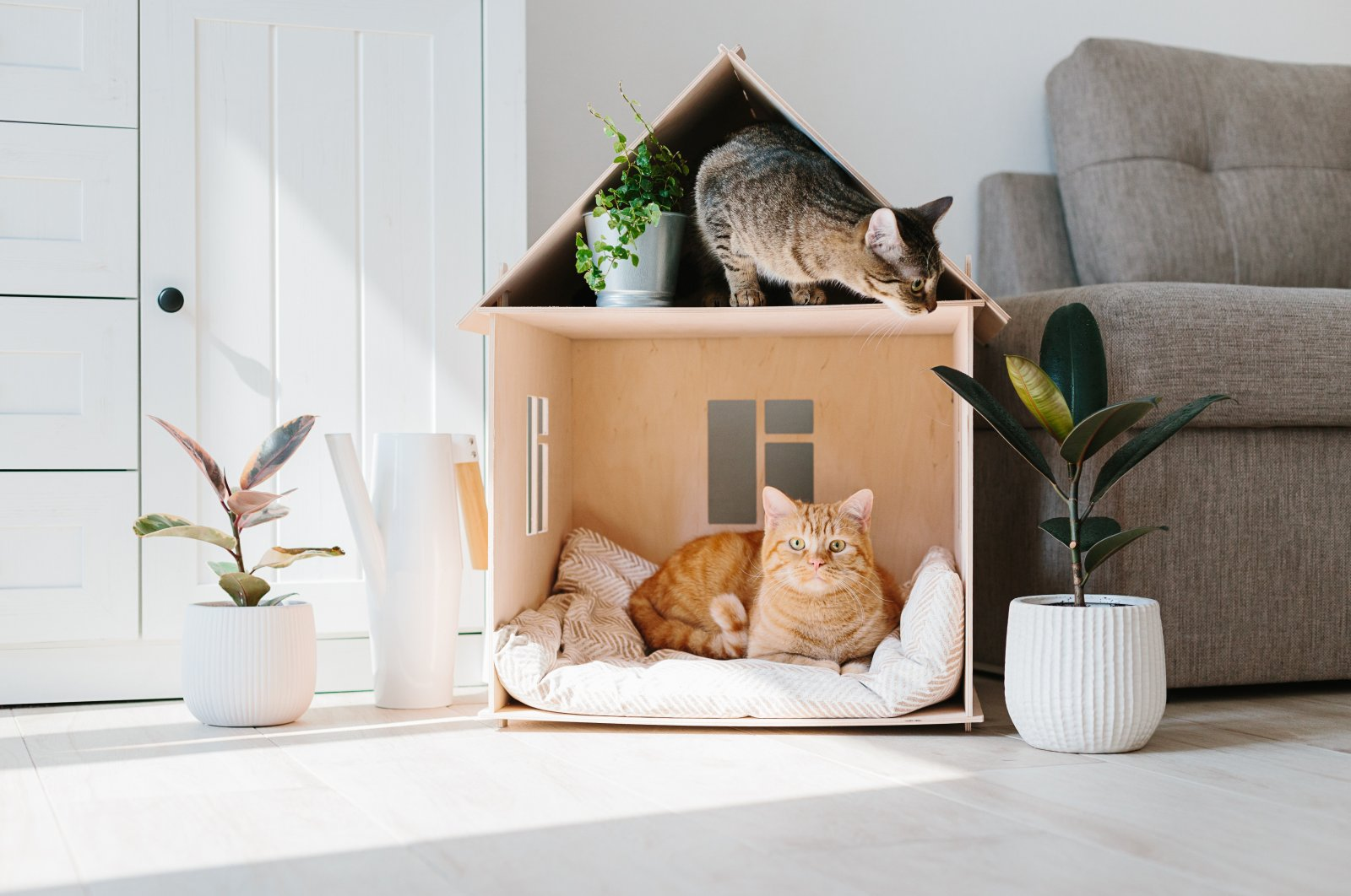 Two cats are seen in a wooden cat house in a living room. (Shutterstock Photo)