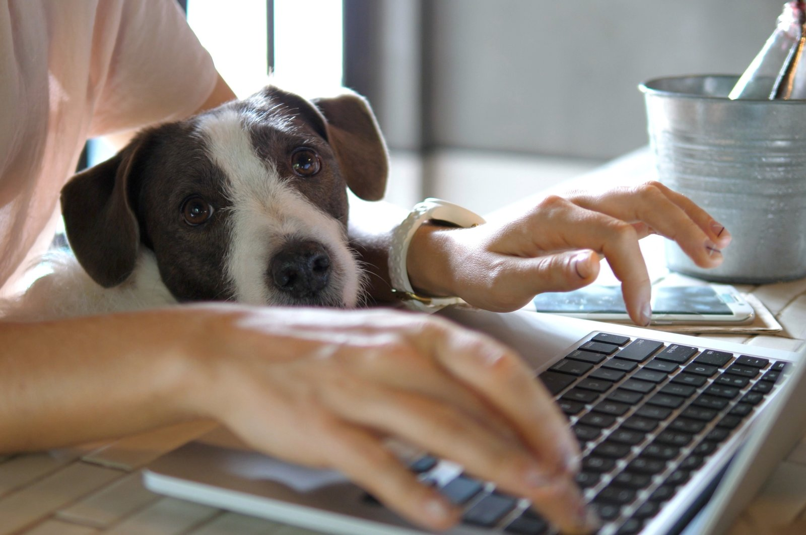 After spending several months working from home, some employees have hit their limits. (Shutterstock Photo)