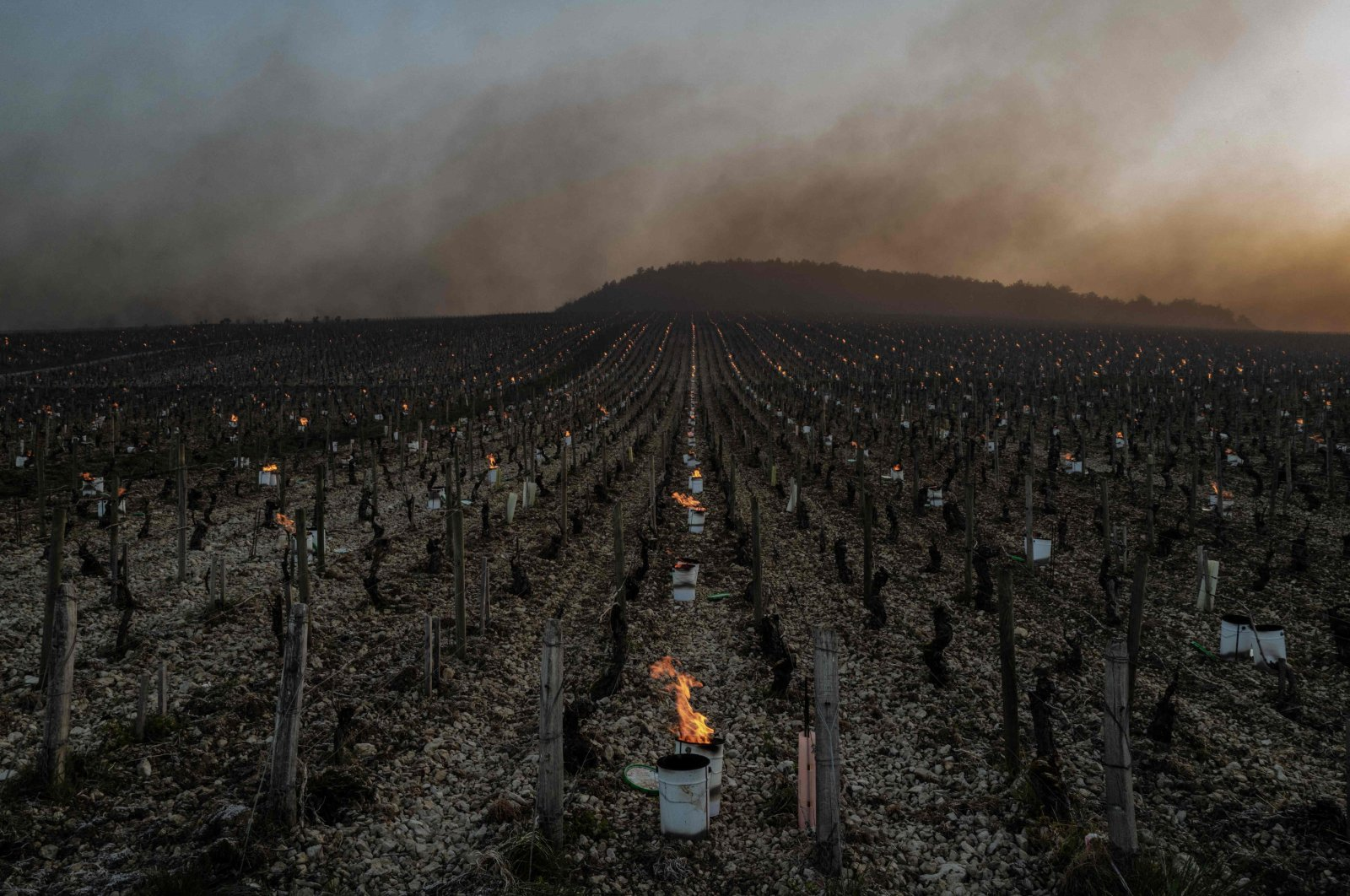 As temperatures fall below zero degrees Celsius during the night, anti-frost candles burnthrough sunrise in the Chablis vineyards near Chablis, Burgundy, France,April 7, 2021. (AFP Photo)