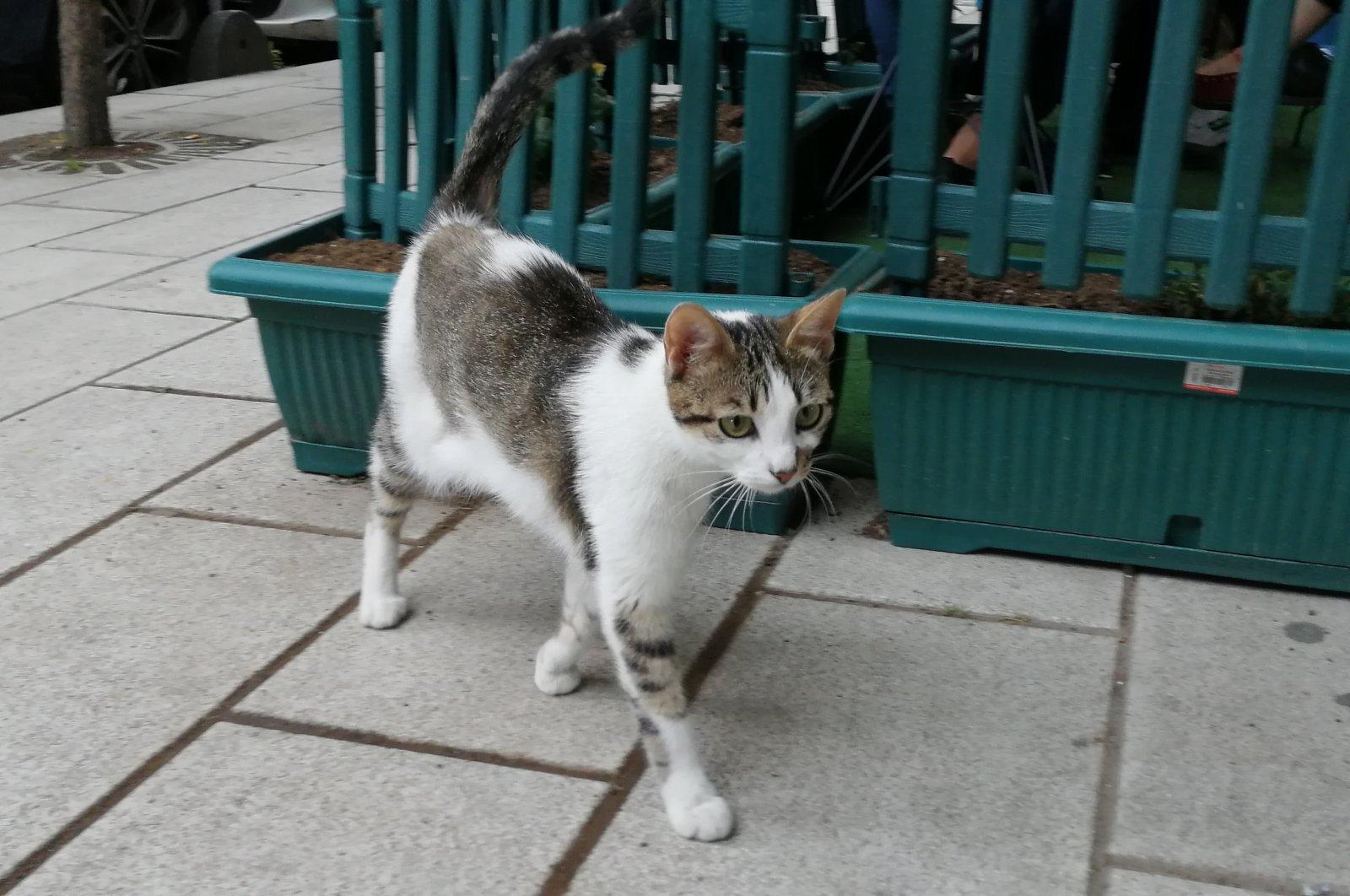 A cat walking in the neighborhood where kittens were killed, in Istanbul, Turkey, June 15, 2021. (DHA Photo)