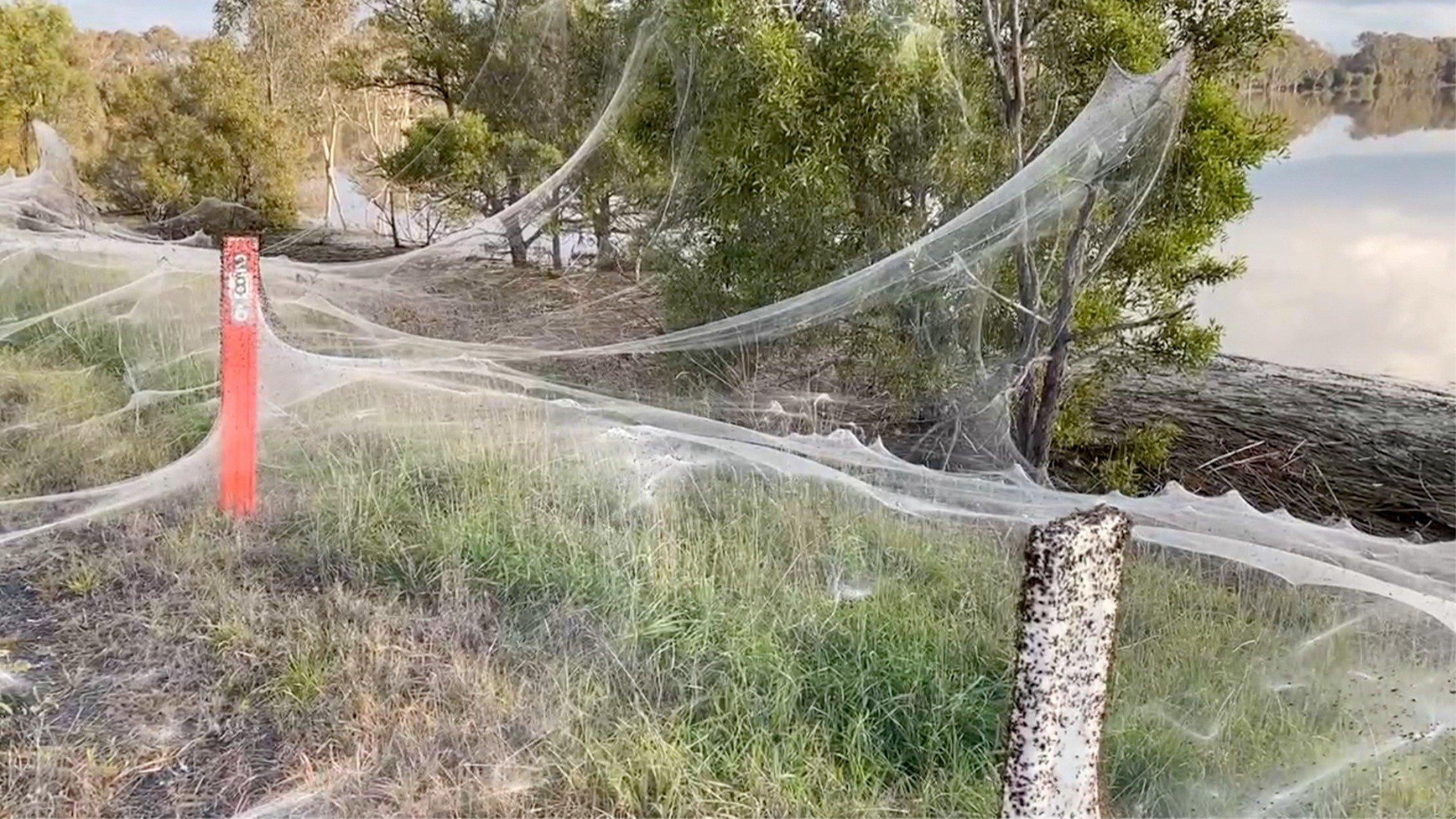 A still image from a social media video shows spiders' gossamer near wetlands in Gippsland, Victoria, Australia, June 14, 2021. (Carolyn Crossley via Reuters)