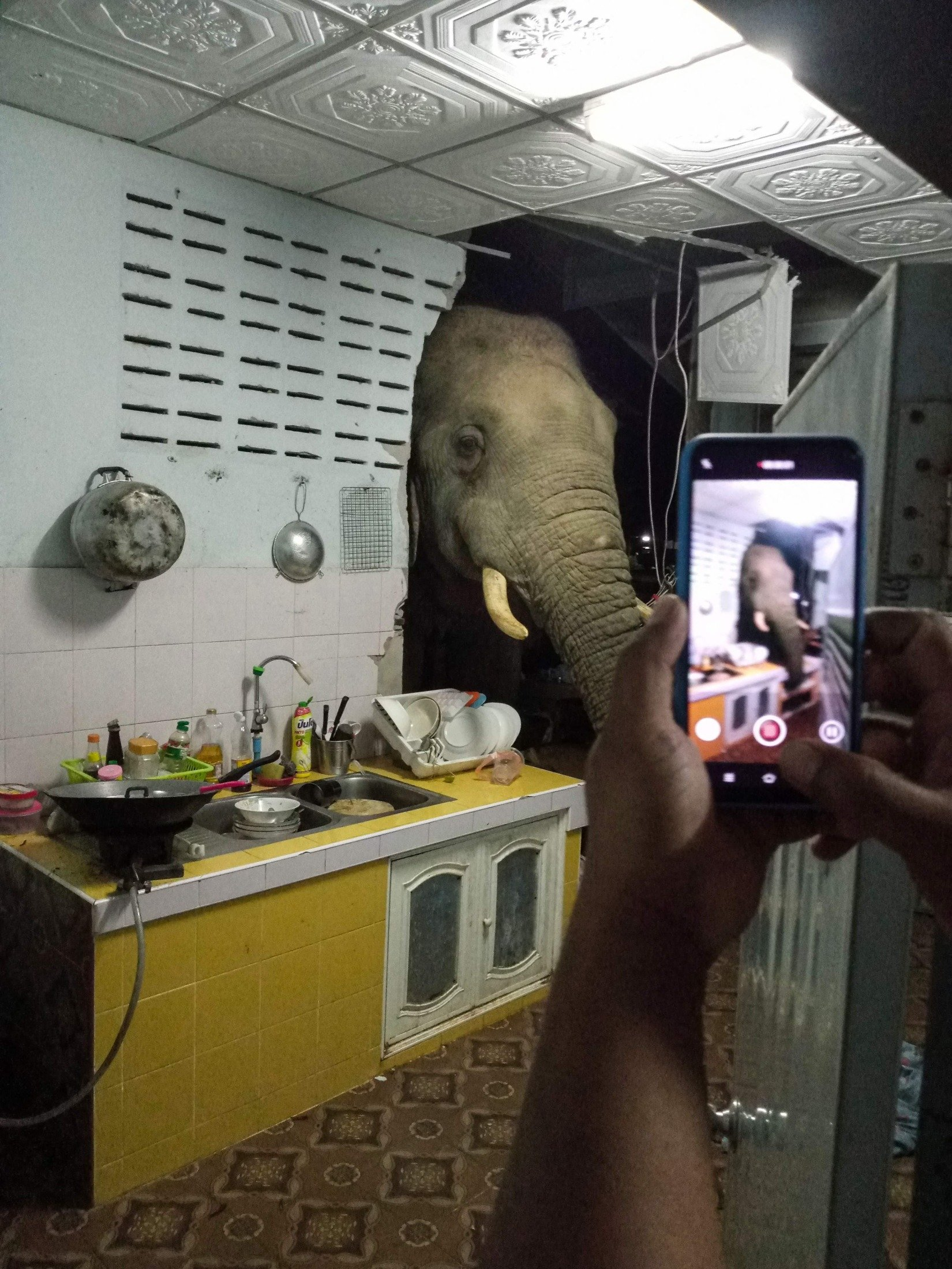 Kittichai Boodchan uses his mobile phone to film a video as an elephant searches for food in the kitchen of their home in Pa La-U, Hua Hin, Thailand, June 20, 2021. (Radchadawan Peungprasopporn via AFP)