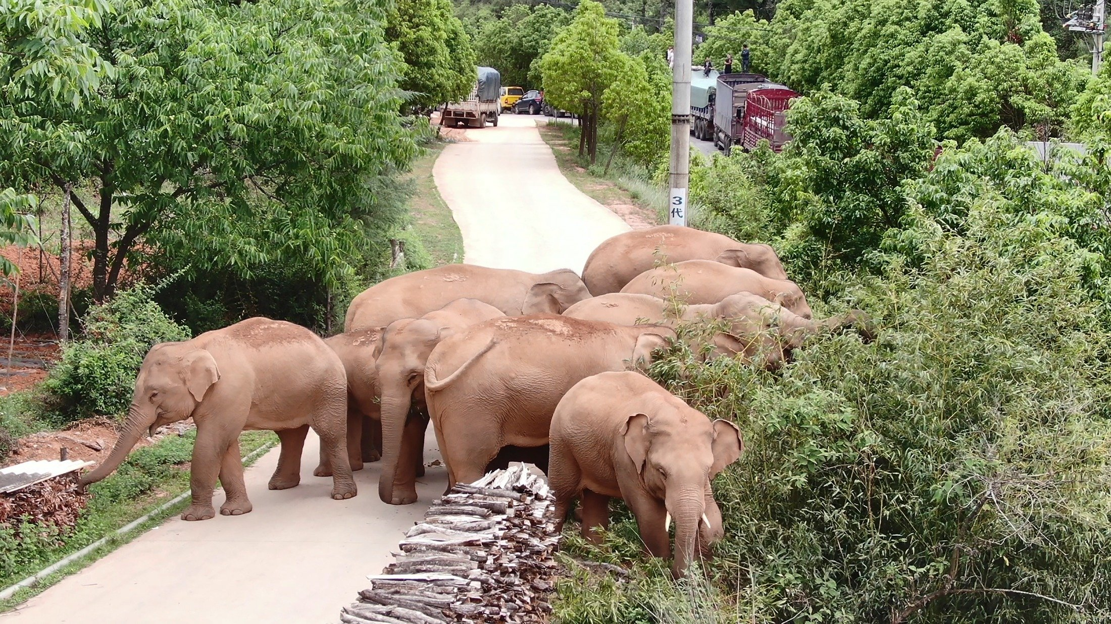 A migrating herd of elephants graze near Shuanghe Township, Jinning District of Kunming city in southwestern China's Yunnan Province, June 4, 2021. (Yunnan Forest Fire Brigade via AP)