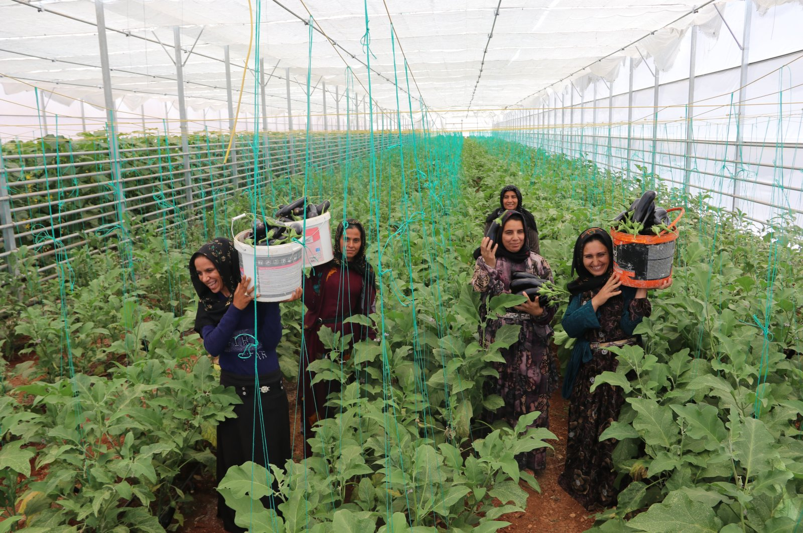 Women work at the greenhouse operated by the Cooperative, in Şanlıurfa, southeastern Turkey, June 23, 2021. (AA PHOTO)