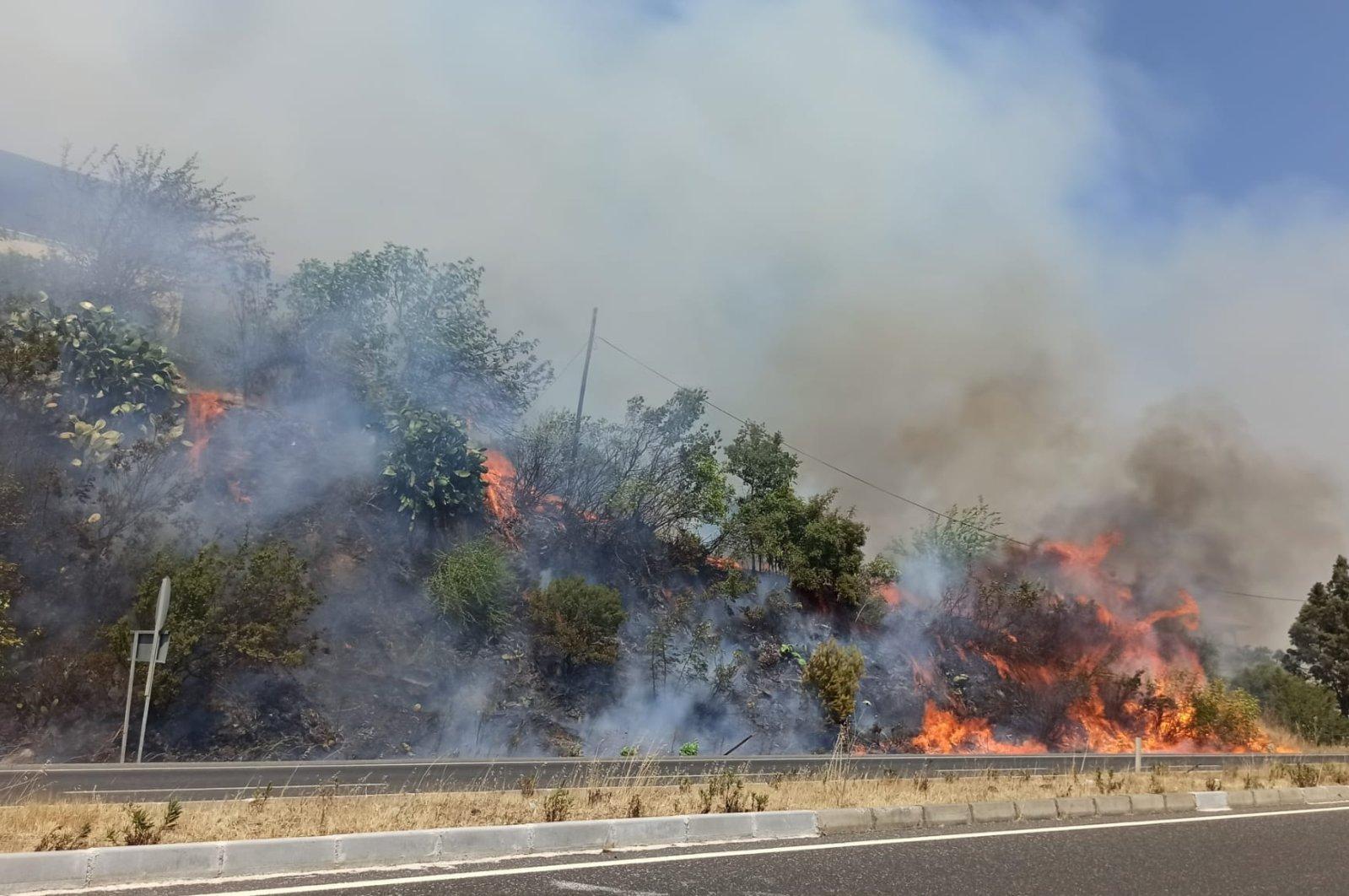 Flames engulf trees on the roadside in Ula district, in Muğla, southwestern Turkey, June 28, 2021. (AA PHOTO)