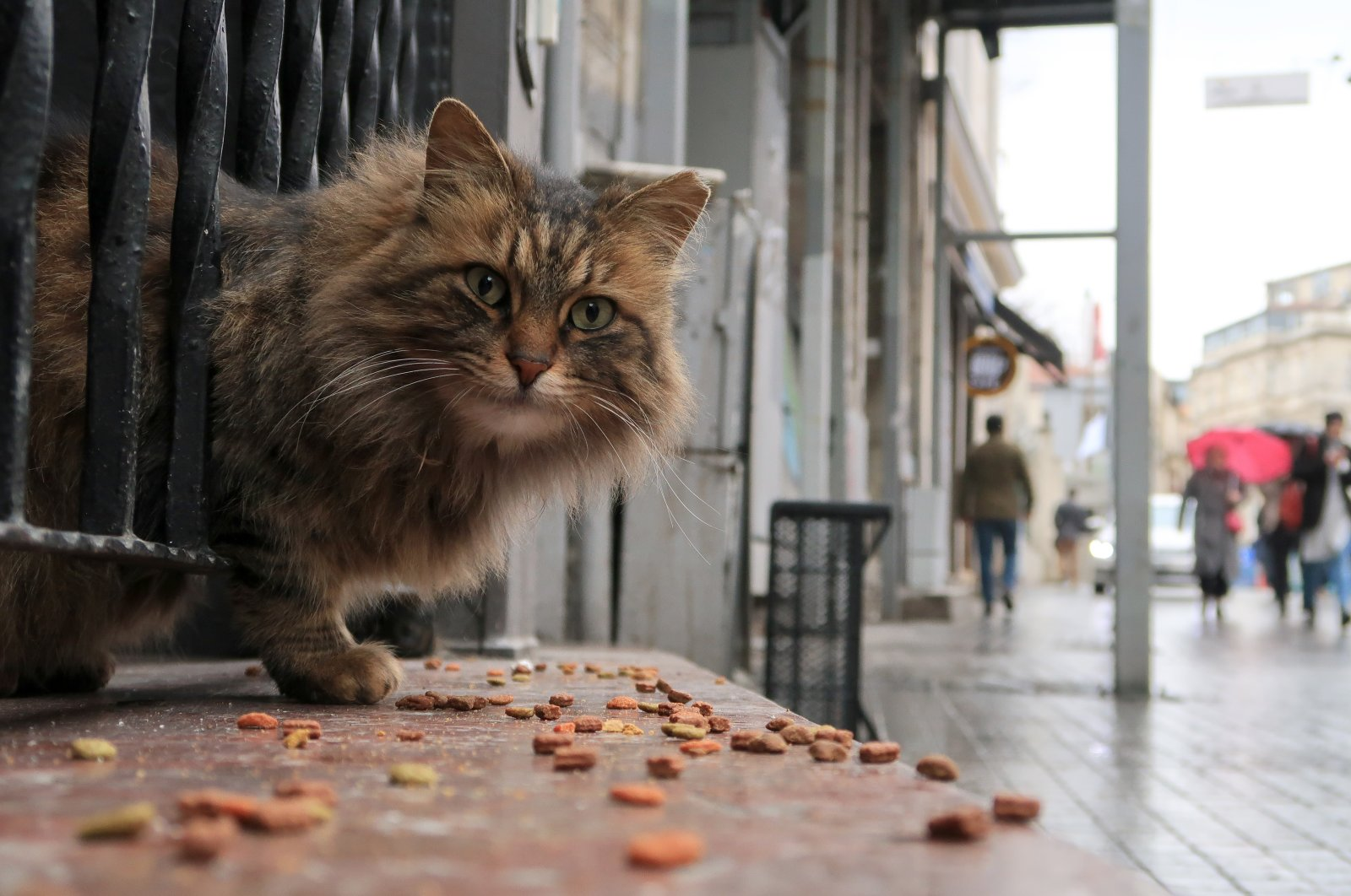 A stray cat eats on a doorstep in Istanbul, Turkey, March 14, 2017. (Getty Images File Photo)