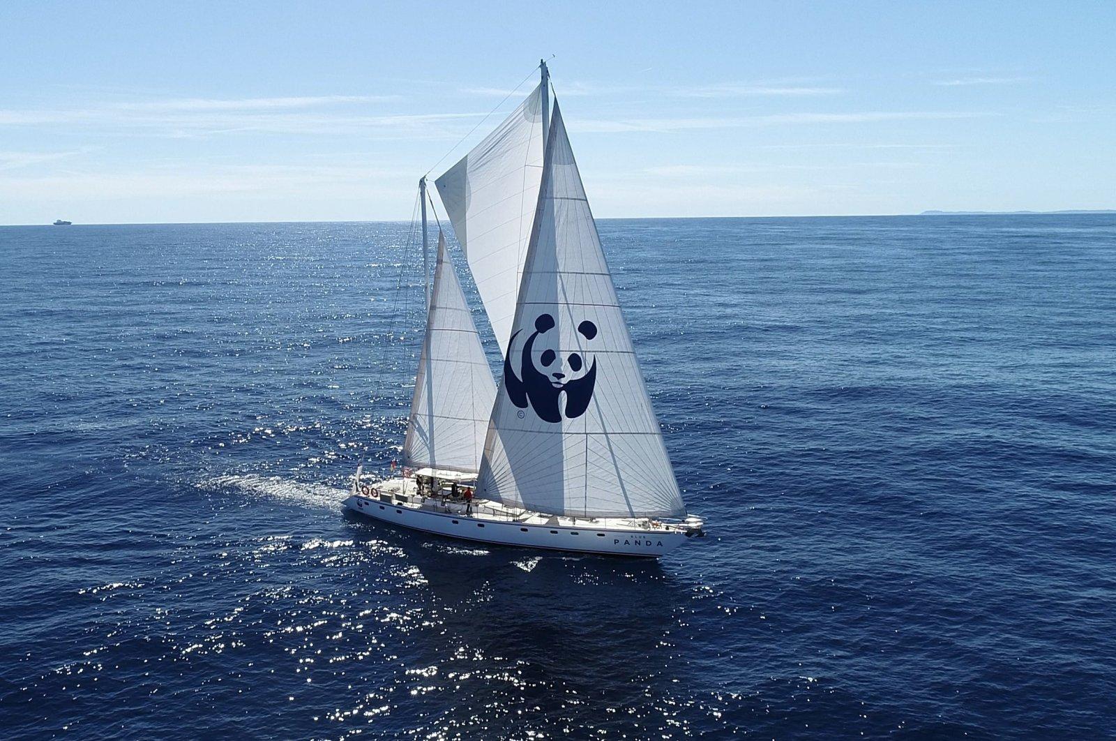 The World Wildlife Fund's ship Blue Panda.