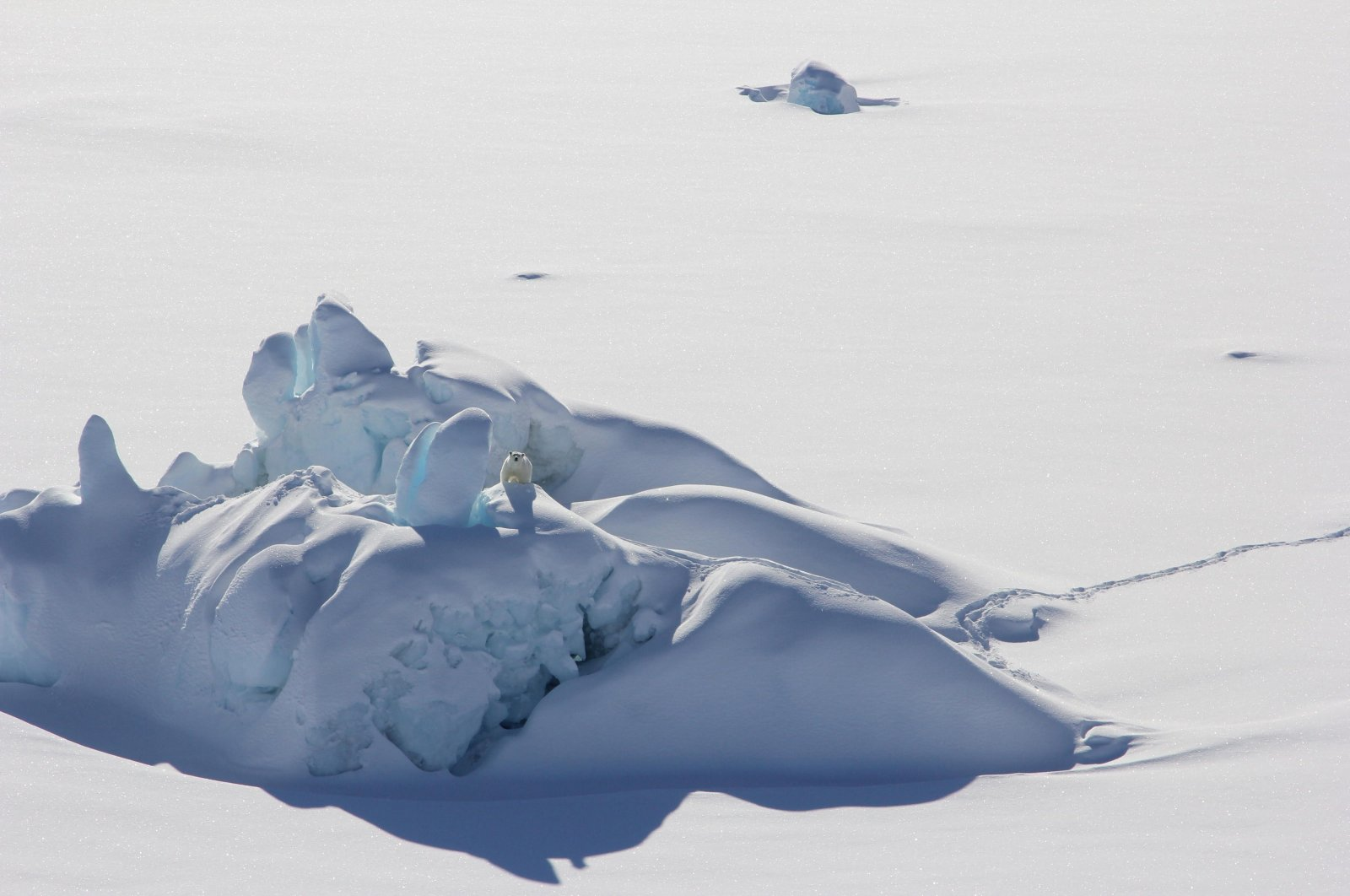 A lone polar bear atop a snow-covered iceberg in the Wandel Sea, Greenland, July 1, 2021. (AFP Photo)