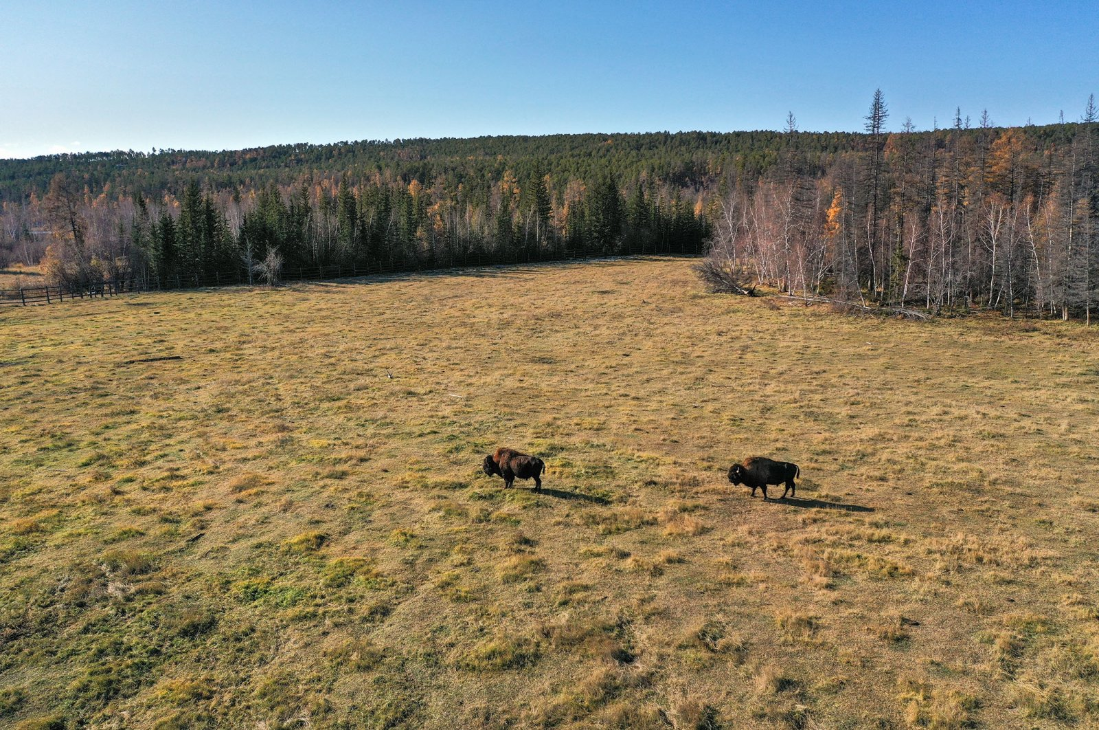 General view of a forest in Russia's Yakutia. (Shutterstock Photo)