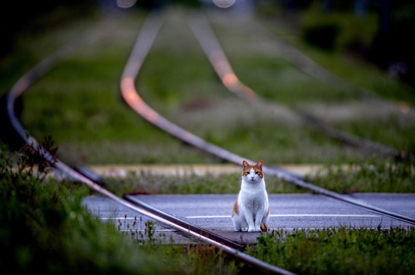 A cat sits between train tracks in Frankfurt, Germany, May 23, 2021. (AP Photo)