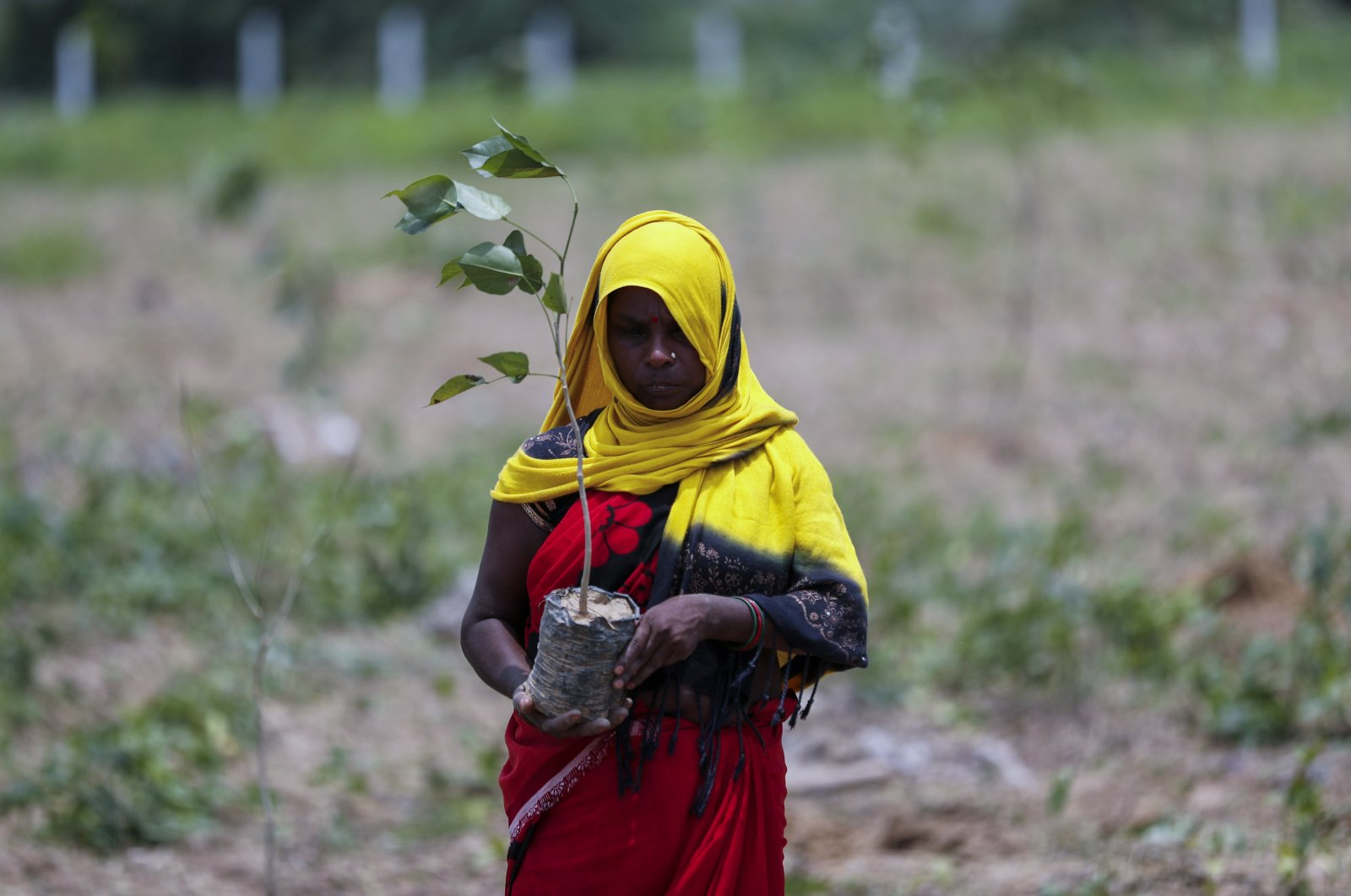 An Indian laborer prepares to plant saplings as part of an annual tree plantation campaign on the outskirts of Prayagraj, in northern Uttar Pradesh state, India, July 4, 2021. (AP Photo)