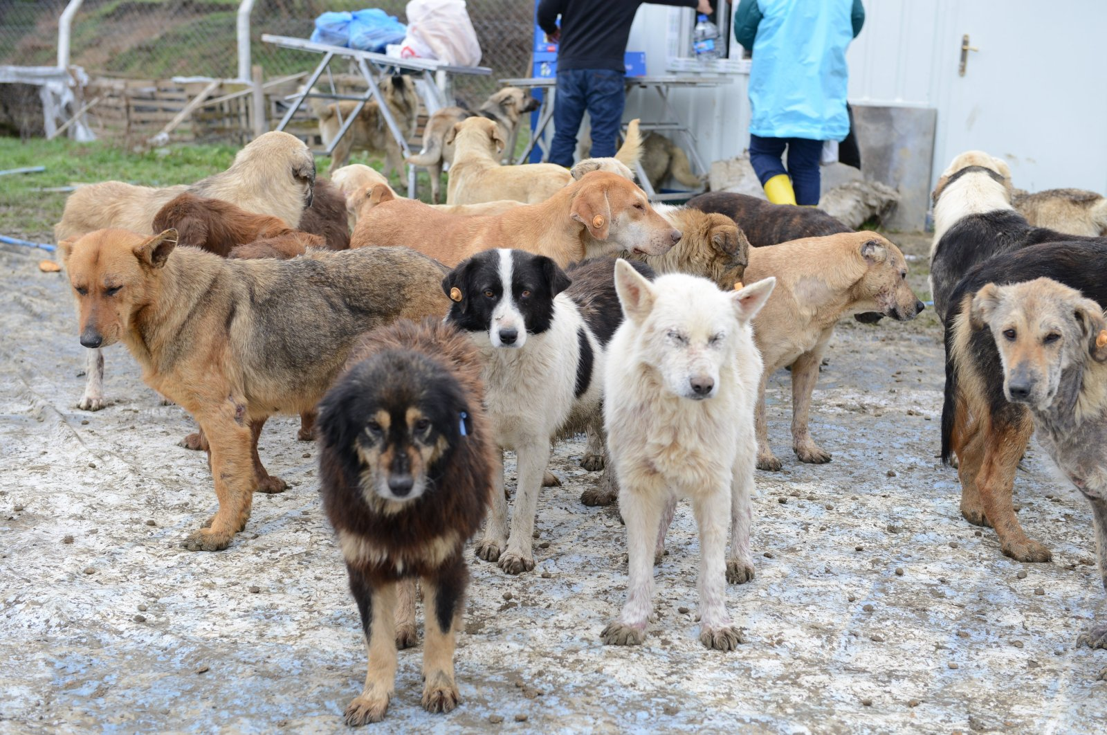 Dogs are pictured at an animal shelter in Istanbul's Beykoz province, July 11, 2018. (Sabah File Photo)