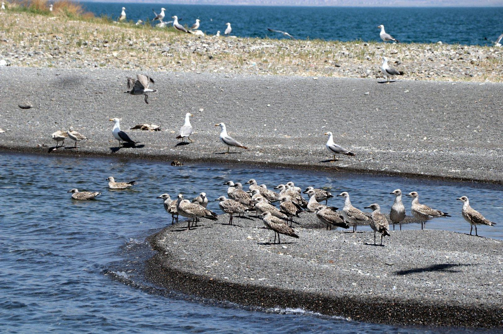 Birds on the shores of Lake Van, in Van, eastern Turkey, July 6, 2021. (DHA PHOTO)