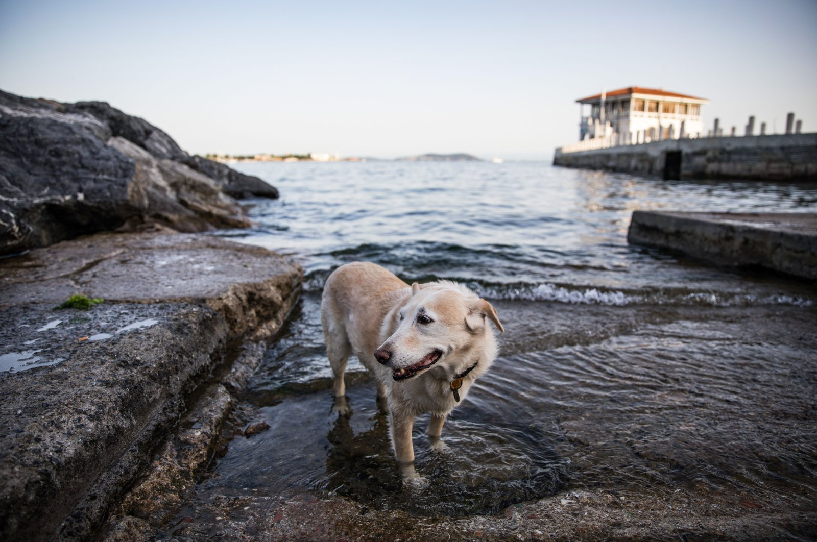 A dog stands in the sea in the Kadıköy district of Istanbul, Turkey, June 7, 2020. (Getty Images)