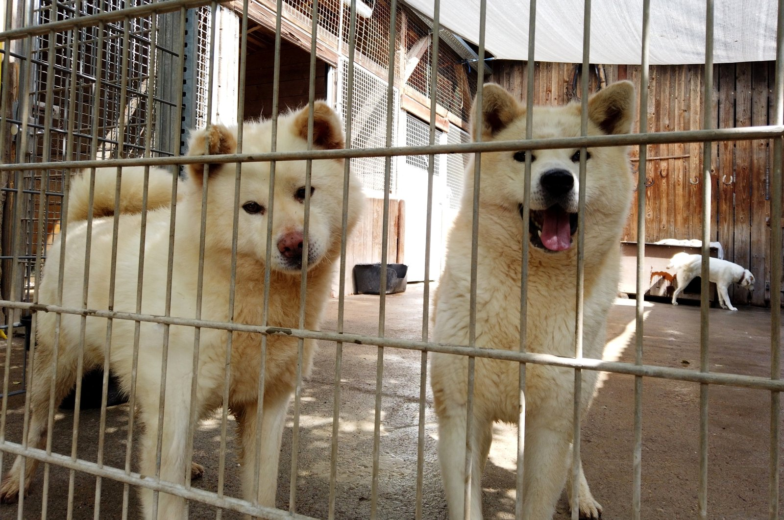 Dogs are pictured in an animal shelter in Reichelsheim, Germany, July 7, 2021. (Reuters Photo)