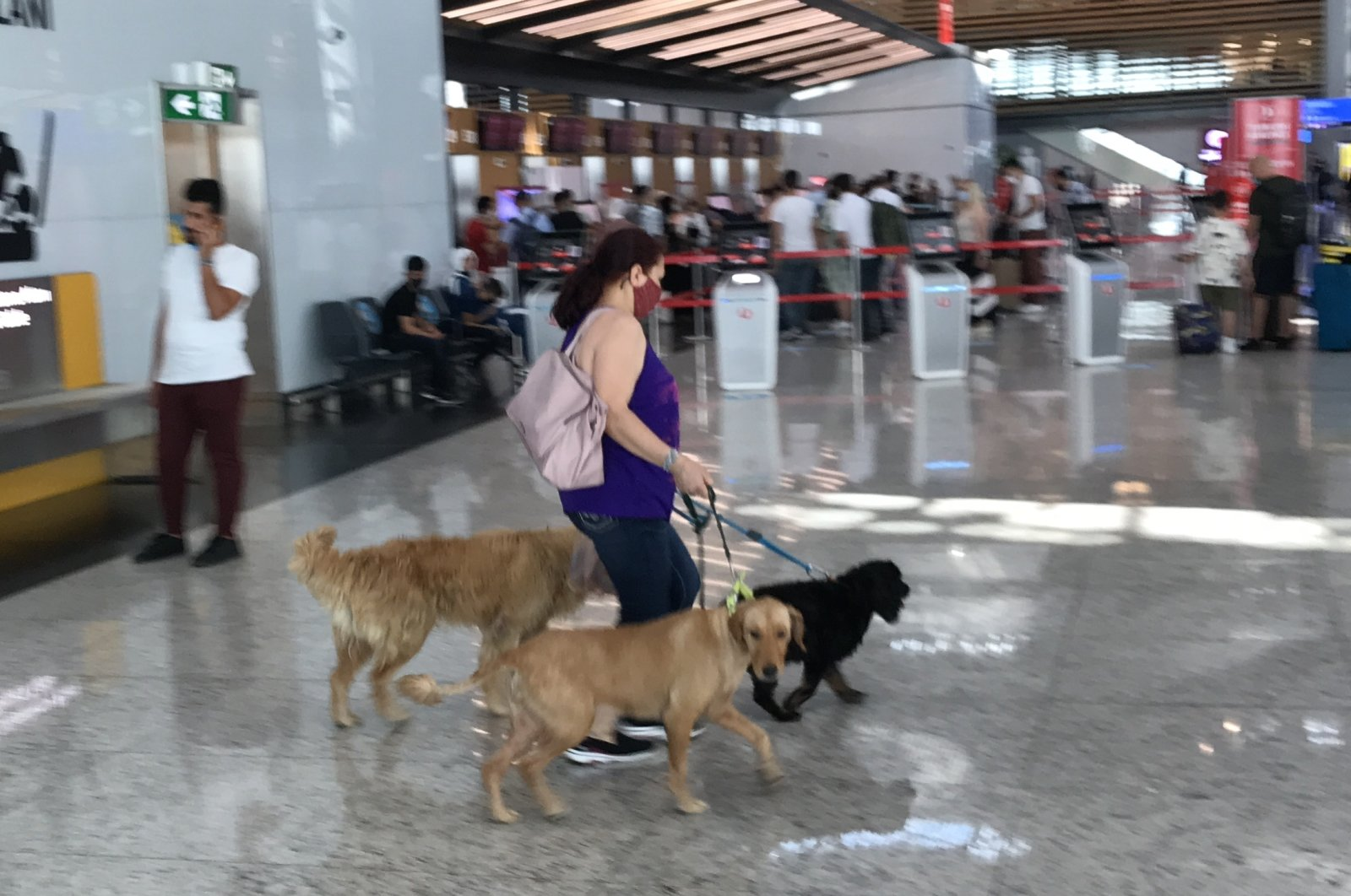 Istanbul Airport has set up a check-in counter and a special room for pets. (AA Photo)