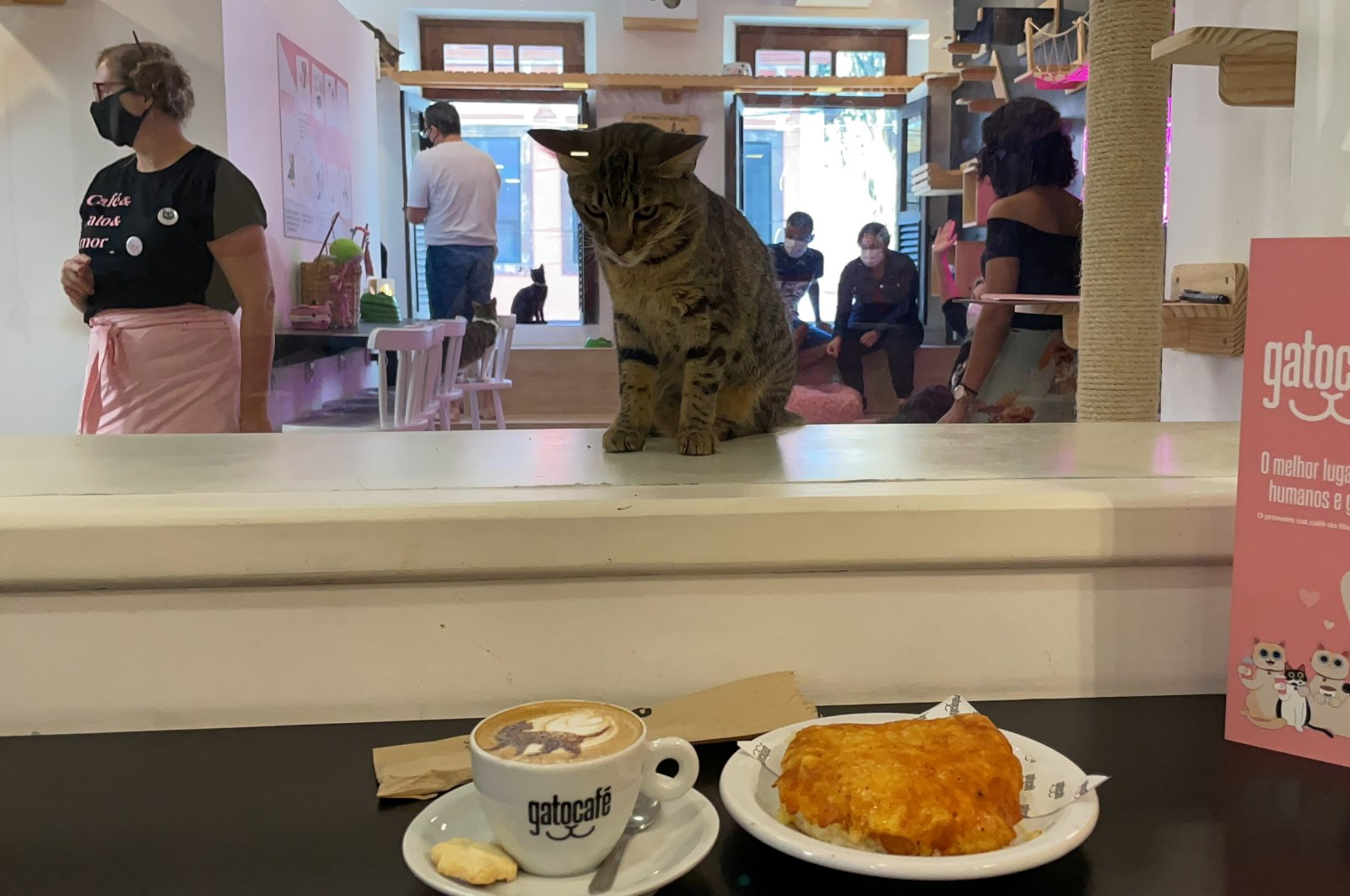 A cat looks at a cappuccino at the Rio cat cafe or Gato Cafe, where customers can relax while adopting a feline, in Rio de Janeiro, Brazil, July 10, 2021. (Reuters Photo)