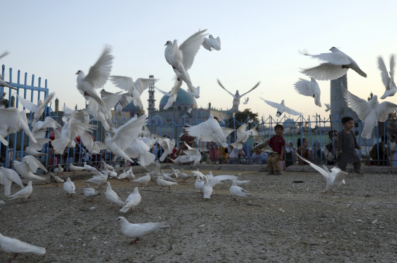Afghan children play with pigeons in the courtyard of the Hazrat-e-Ali shrine, or Blue Mosque, in Mazar-e-Sharif, north of Kabul, Afghanistan, July 7, 2021. (AP Photo)