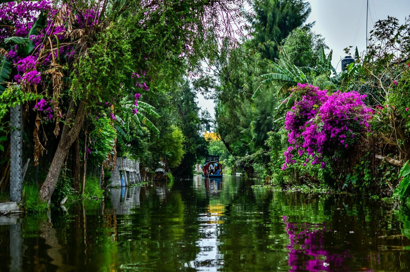 Floating Gardens of Xochimilco, Mexico. (Shutterstock Photo)
