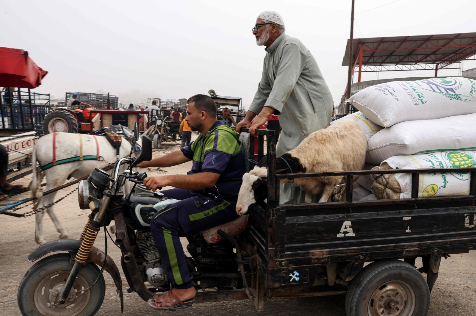 Palestinians drive away with a sheep they just purchased at a livestock market, ahead of Eid al-Adha, in Rafah in the southern Gaza Strip, on July 17, 2021. (AFP Photo)