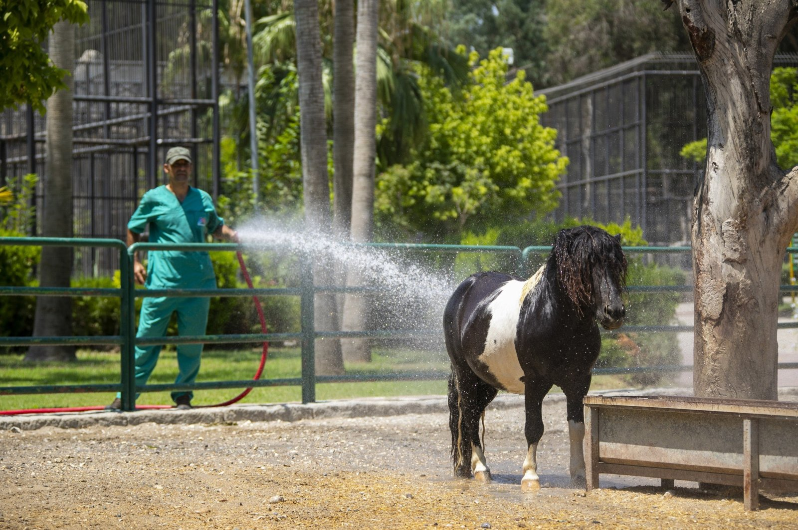 An attendant sprays water to cool a pony at Tarsus Nature Park, in Mersin,Turkey, July 18, 2021. (İHA PHOTO)