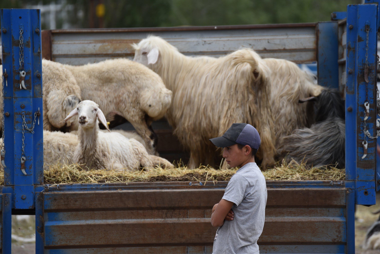 Orang-orang yang bisa mengorbankan seekor binatang selama bayram membaginya dengan orang miskin.  (Foto AA)