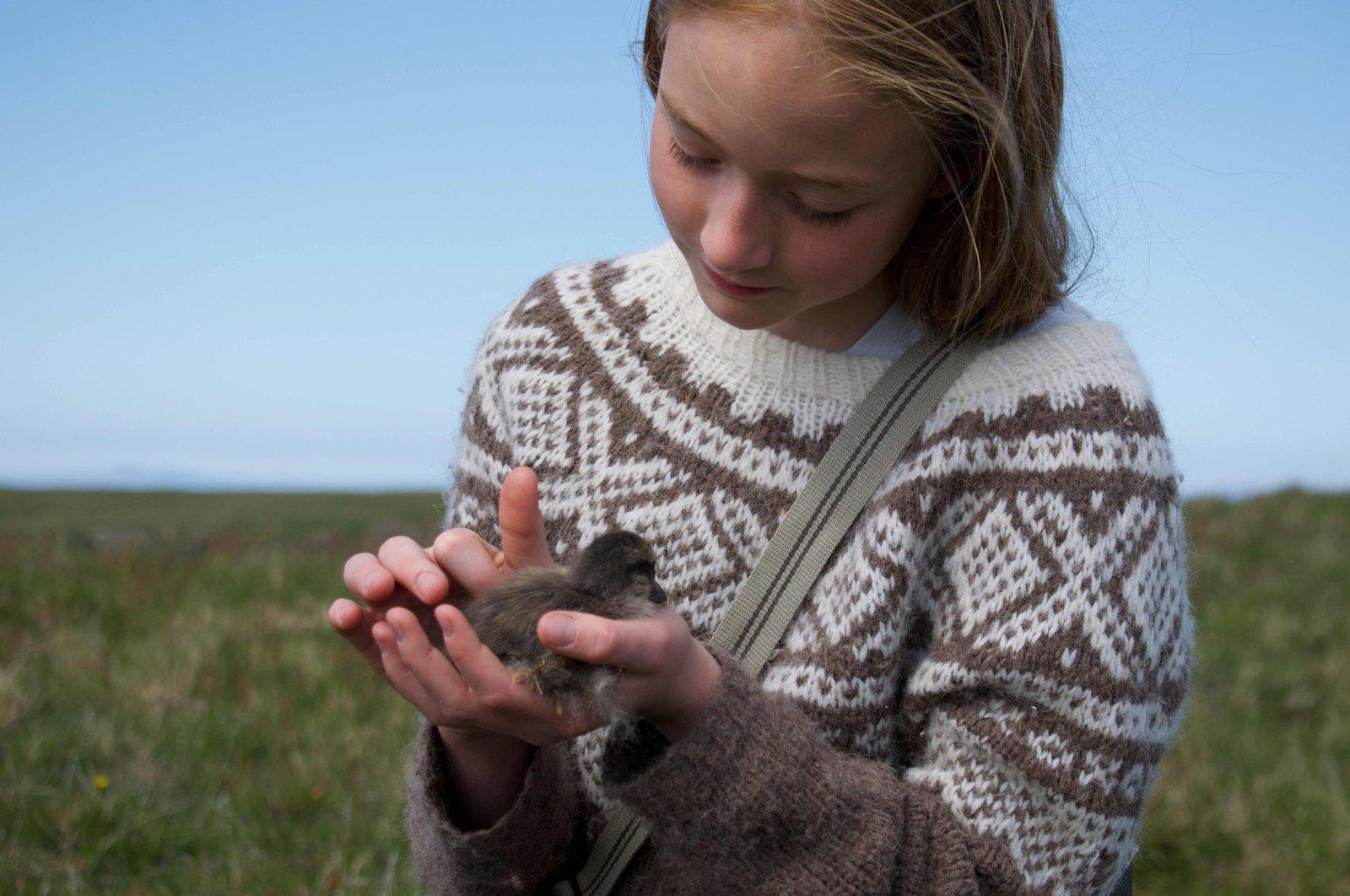 11-years-old Bryndis Jonsdottir, Erla Fridriksdottirís niece, cuddles an eider duckling on the Bjarneyjar island in Breidafjordur Bay, Iceland, July 4, 2021. (AFP Photo)