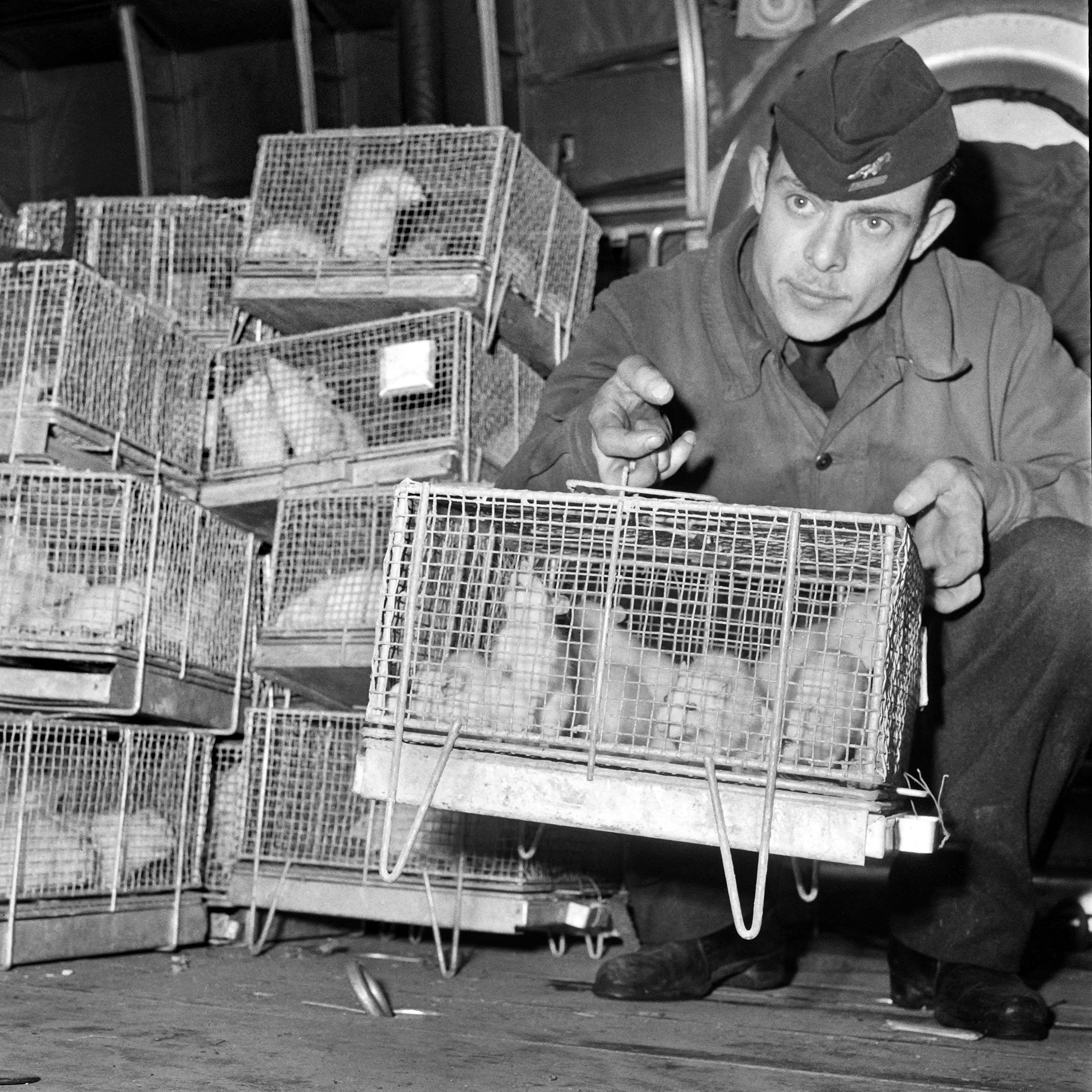 At Le Bourget Paris airport a soldier holds cages of guinea pigs arriving from Reggane, southern Algerian Sahara desert, after they were exposed to the radiations of the third French nuclear test carried out in 1960, Dec. 29, 1960. (AFP Photo)